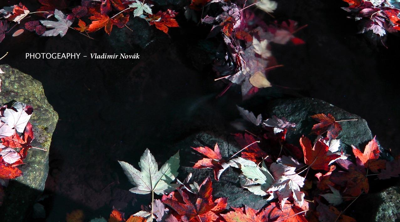 Autumn - 9 by Vladimír Novák