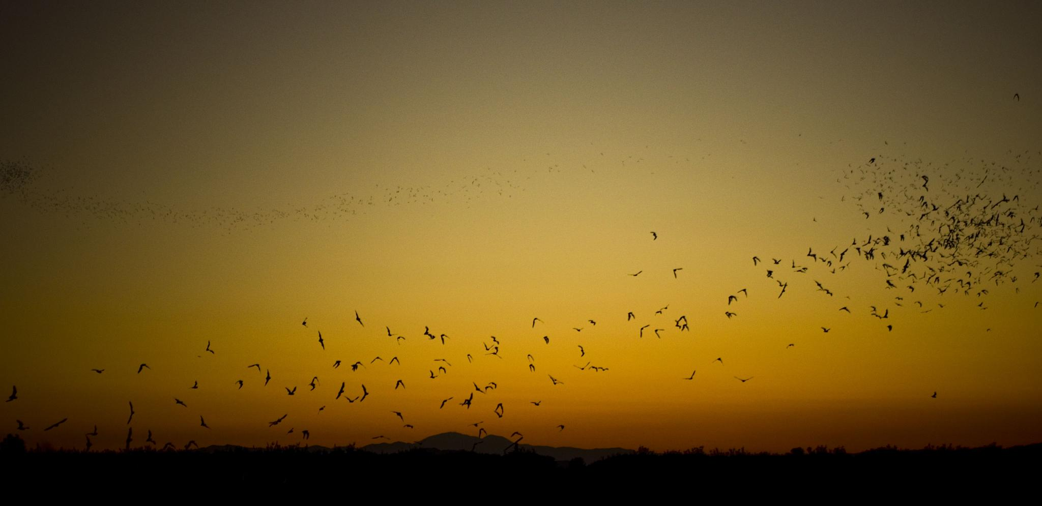 bats!!! by Garciathemexicansmith