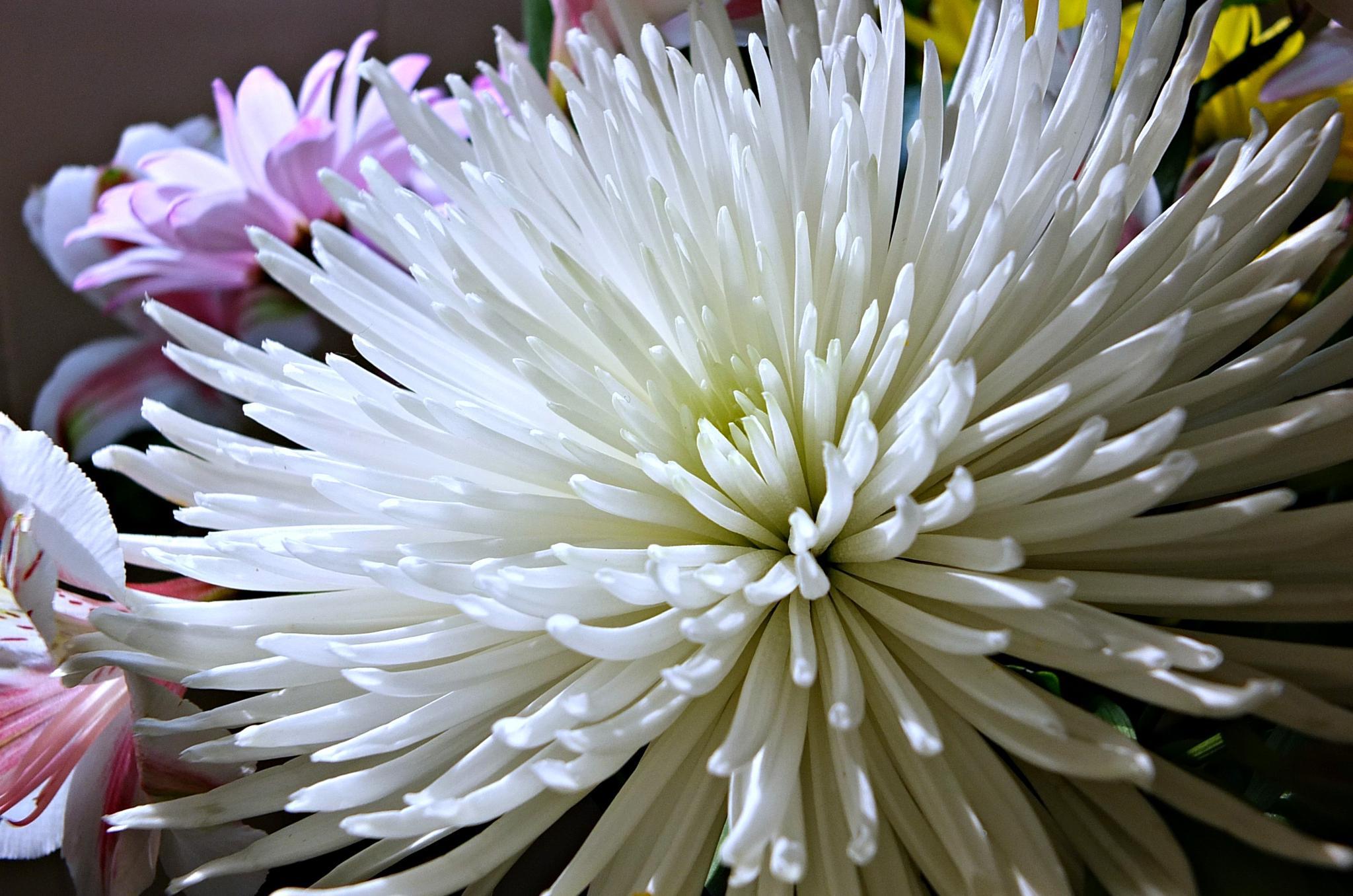 white bloom by pattids