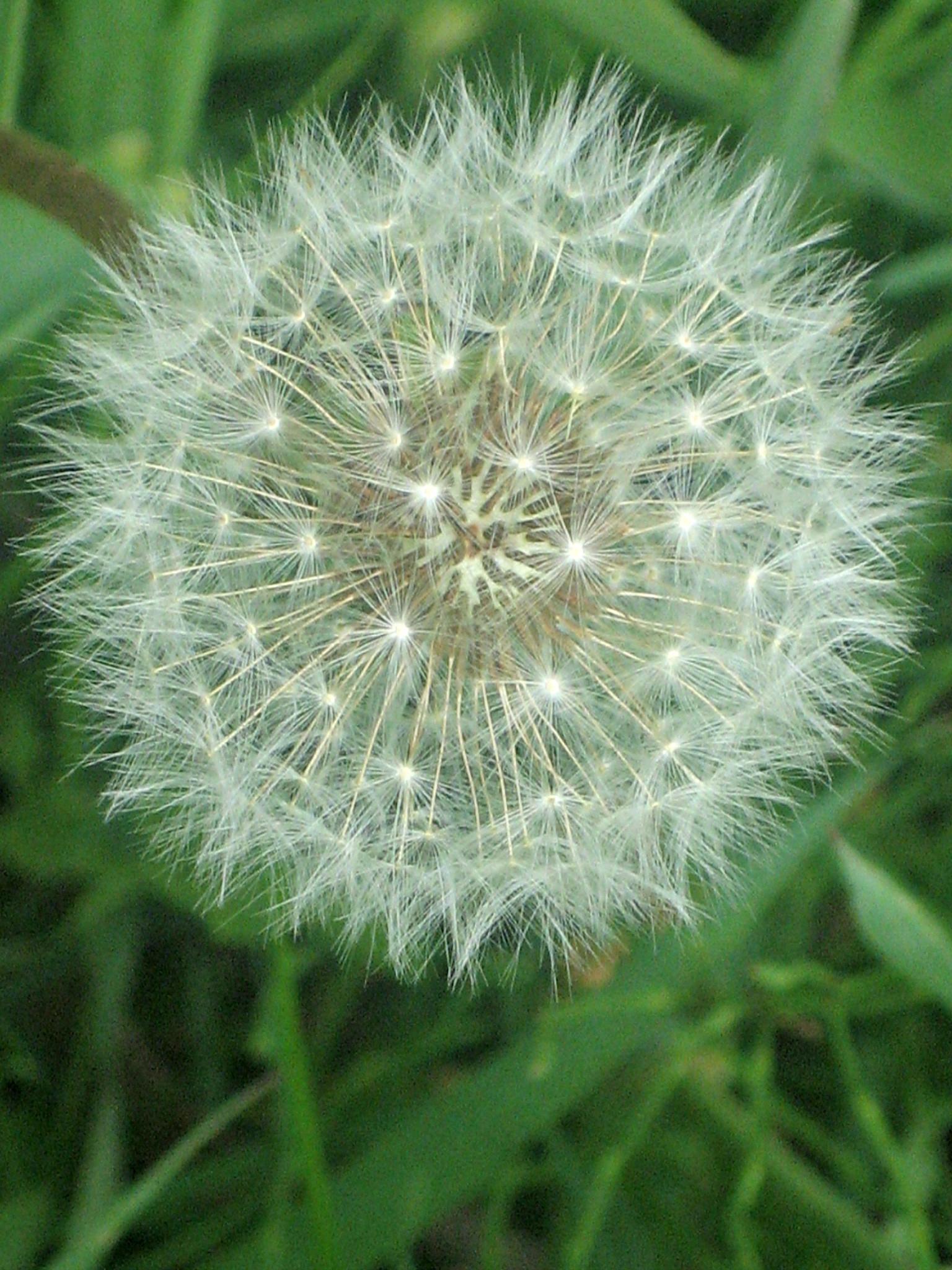 make a wish! by pattids
