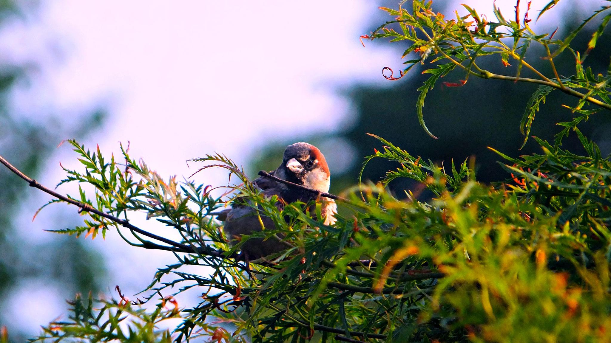 scowling bird by pattids