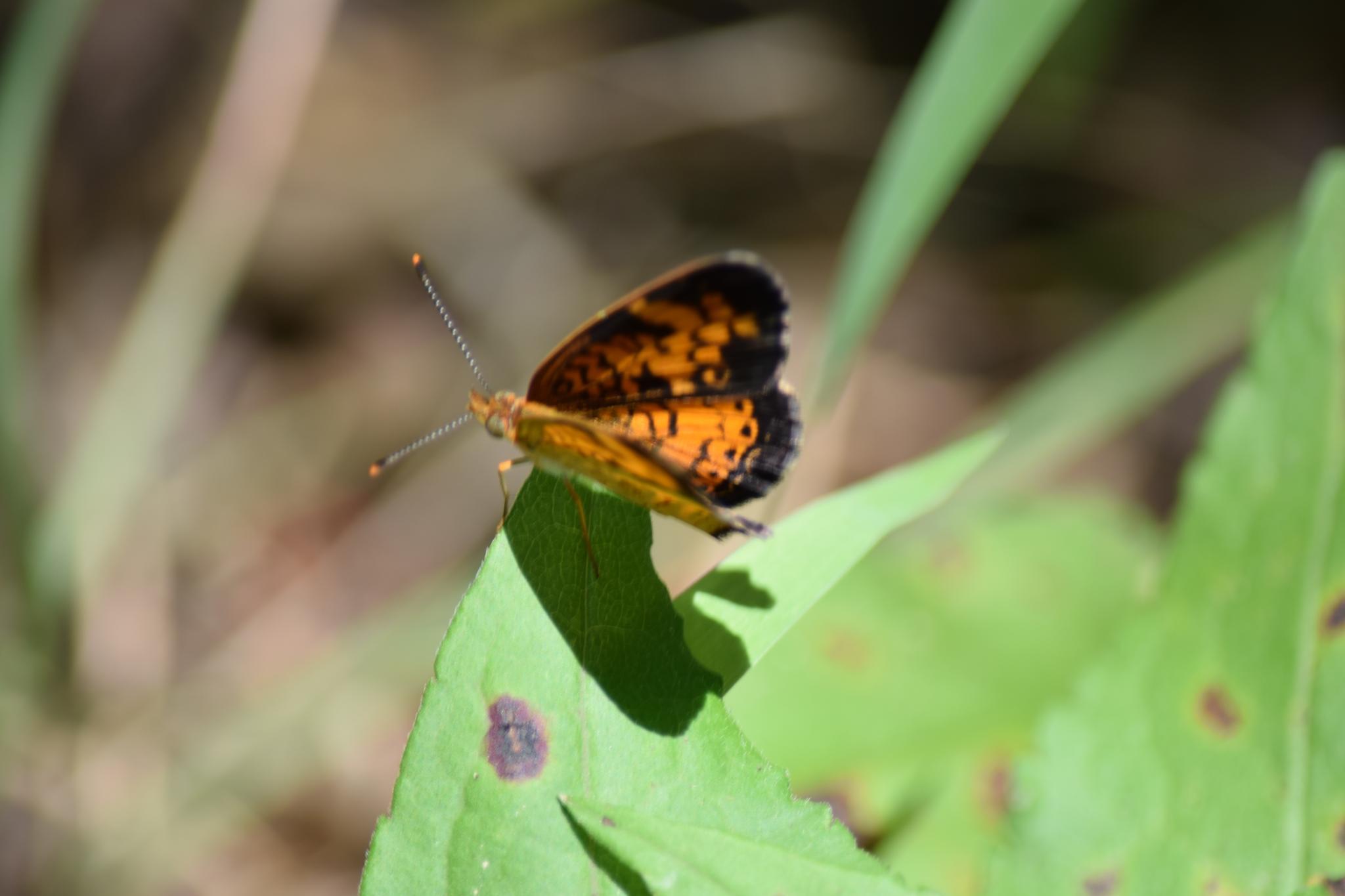 butterfly by candiebaldwin