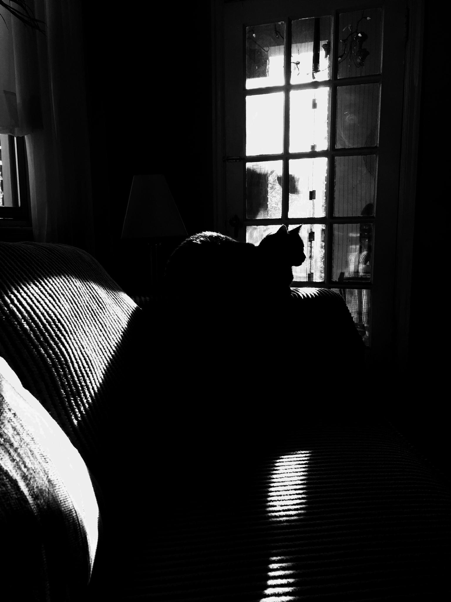 Hoo dat cat by glassworx2
