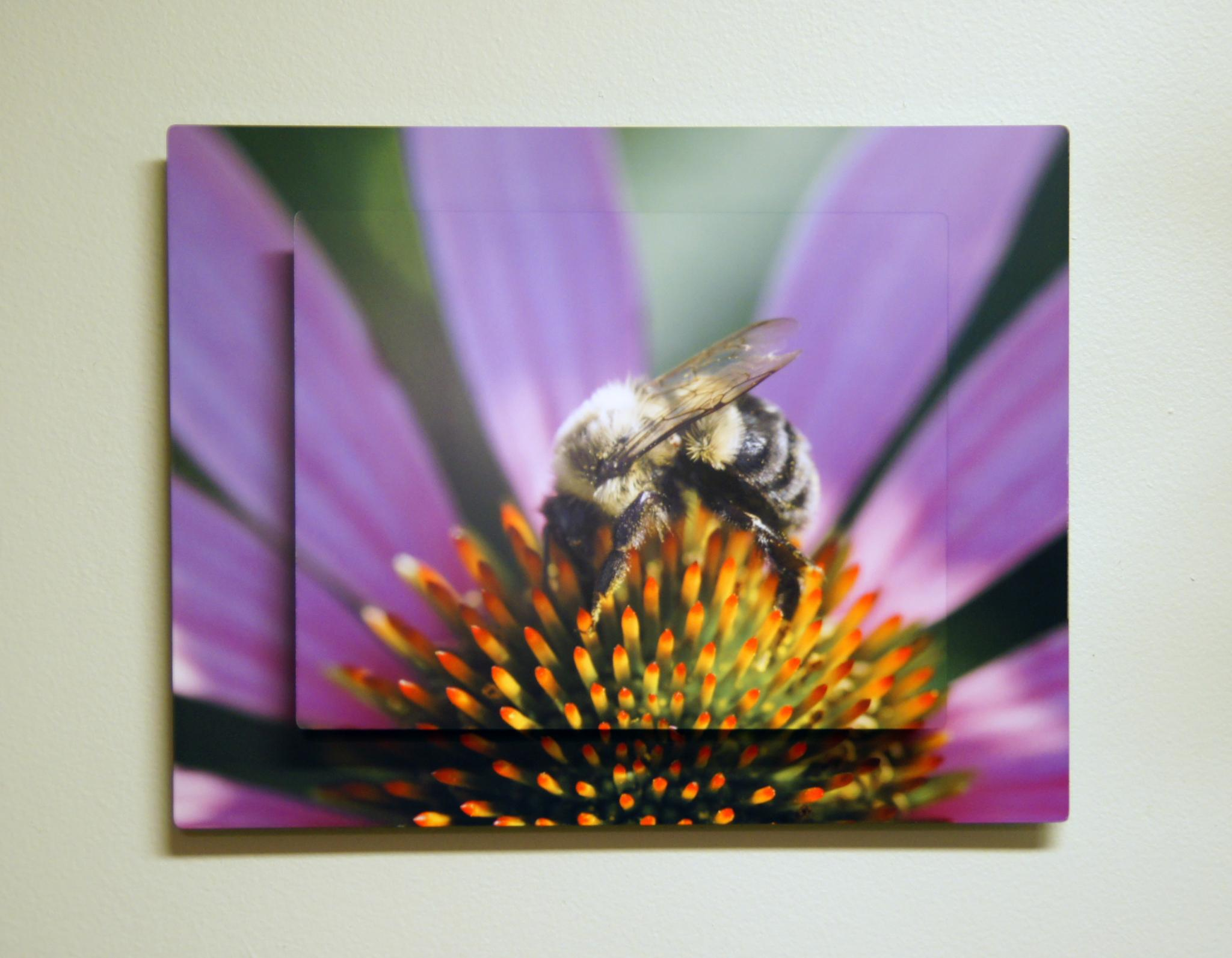 Double Aluminum Photo Panel by CloseUp Images by CloseUpImages