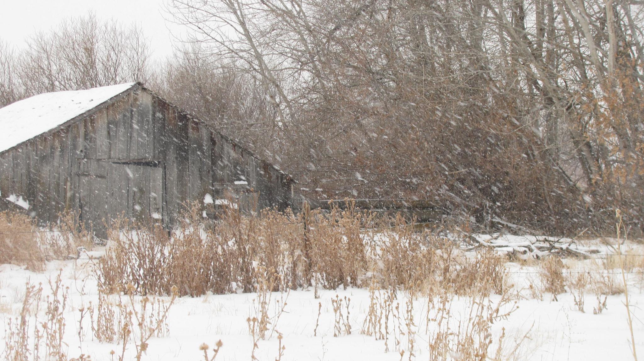 Old Milkbarn-Winter by peteyfoozer1