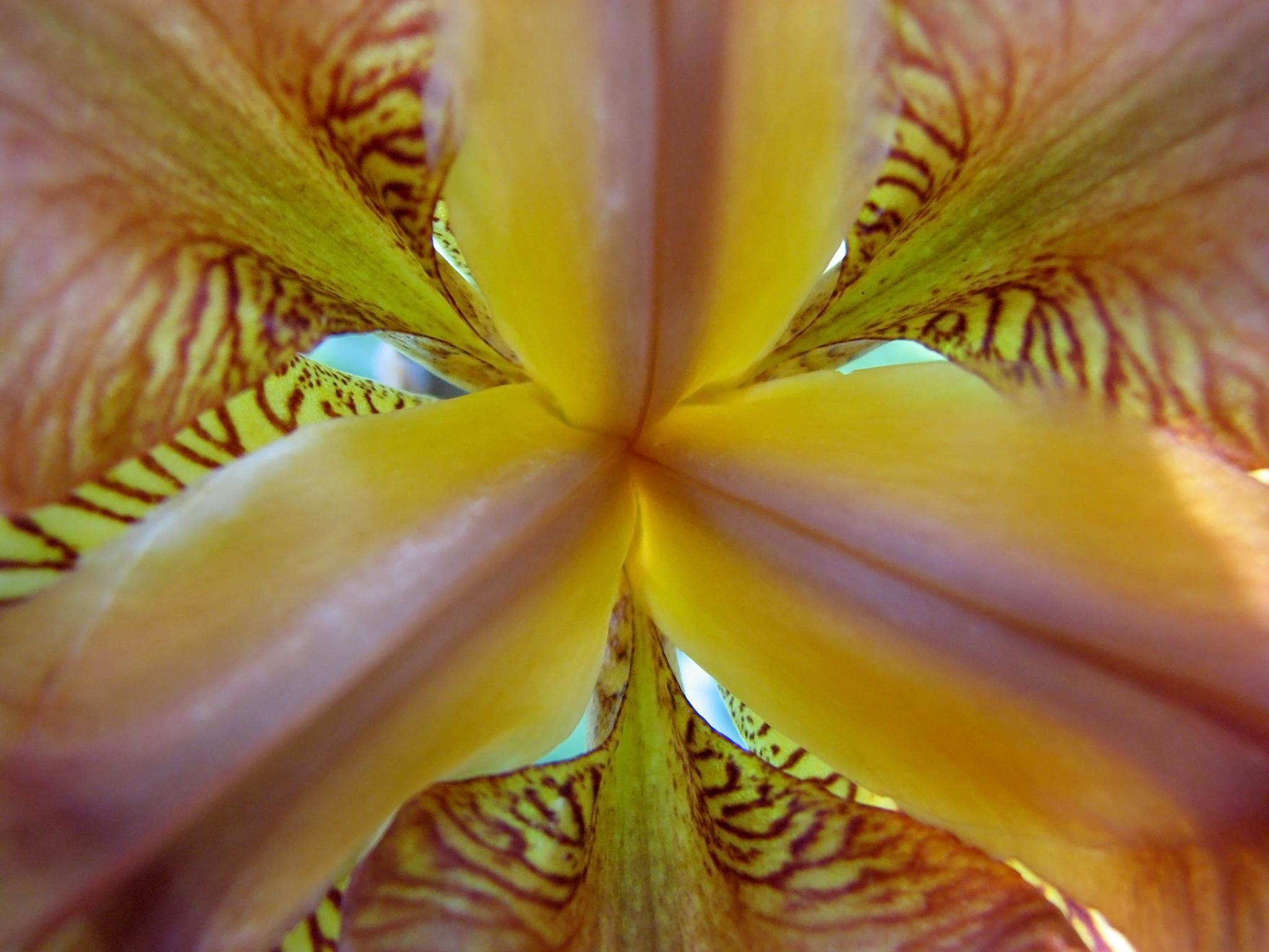 Inside an iris by goddessteri211