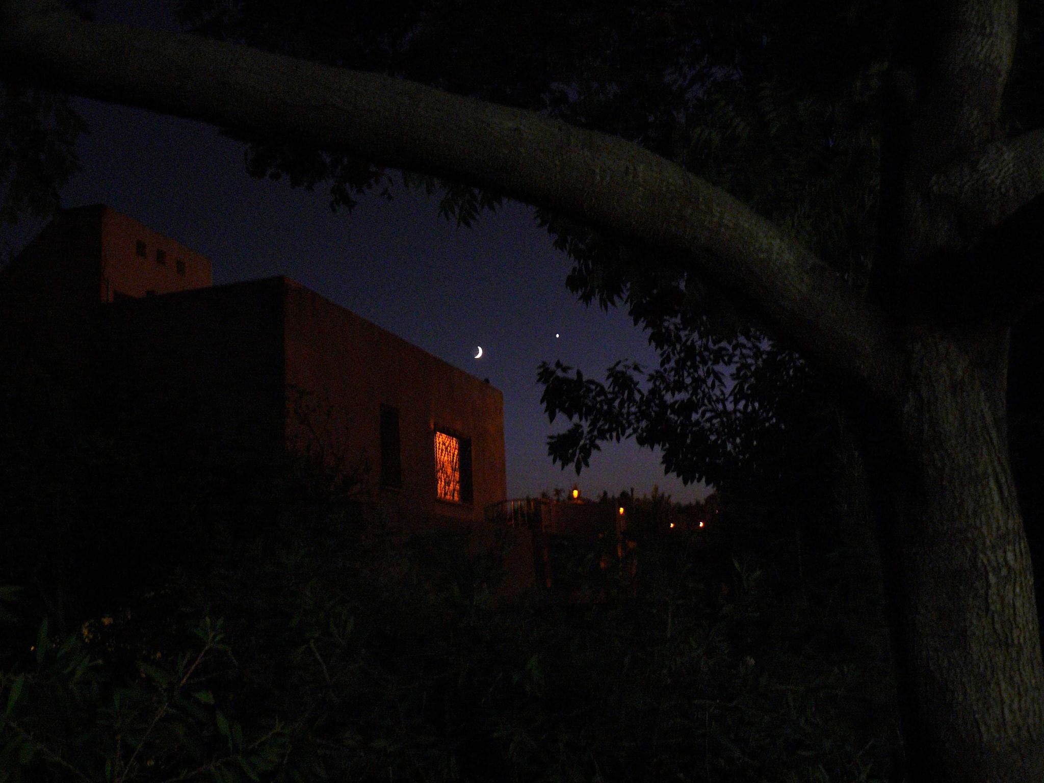 Arabian Night by Dave Davidson