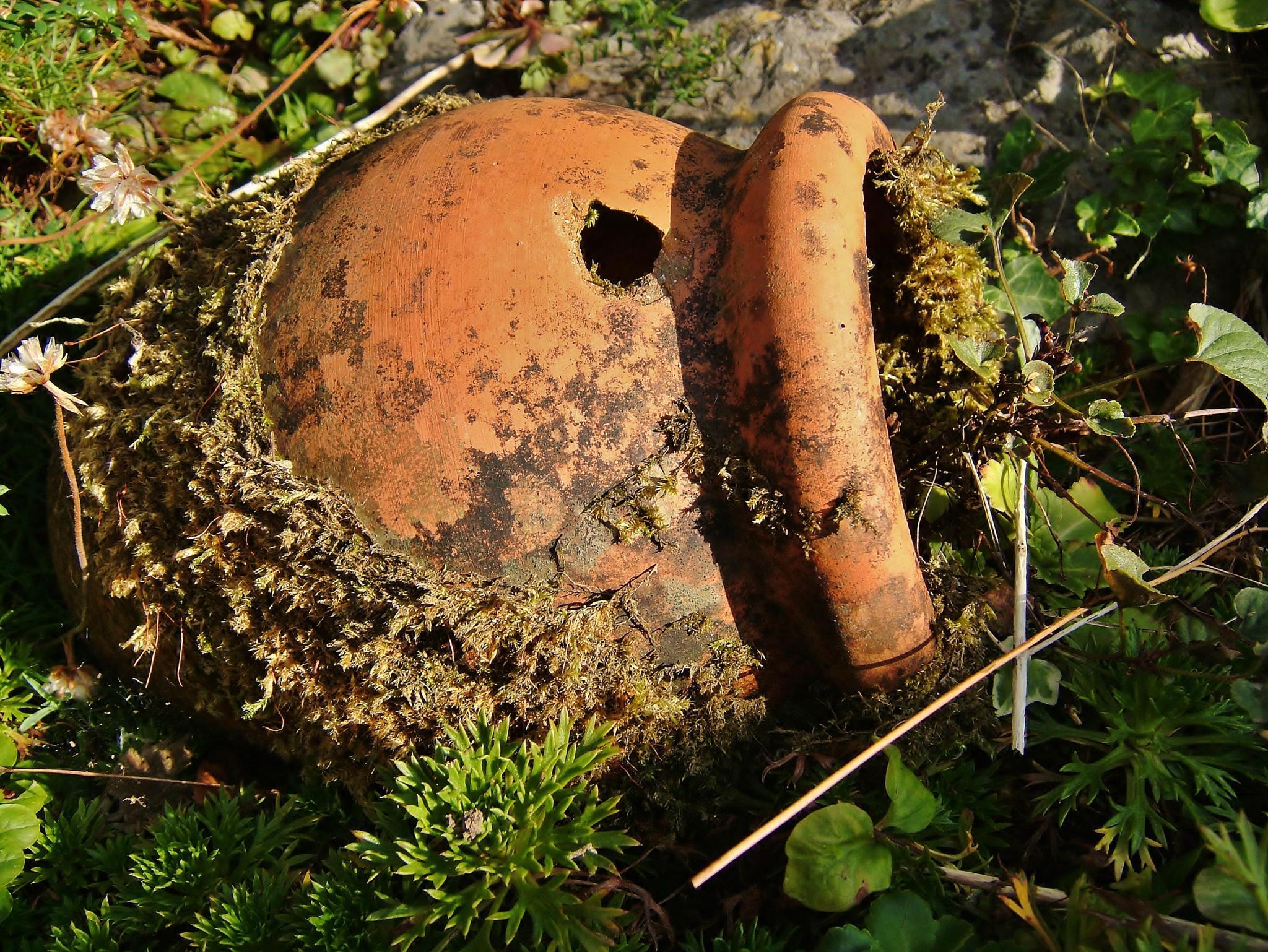 Lost garden by Dave Davidson