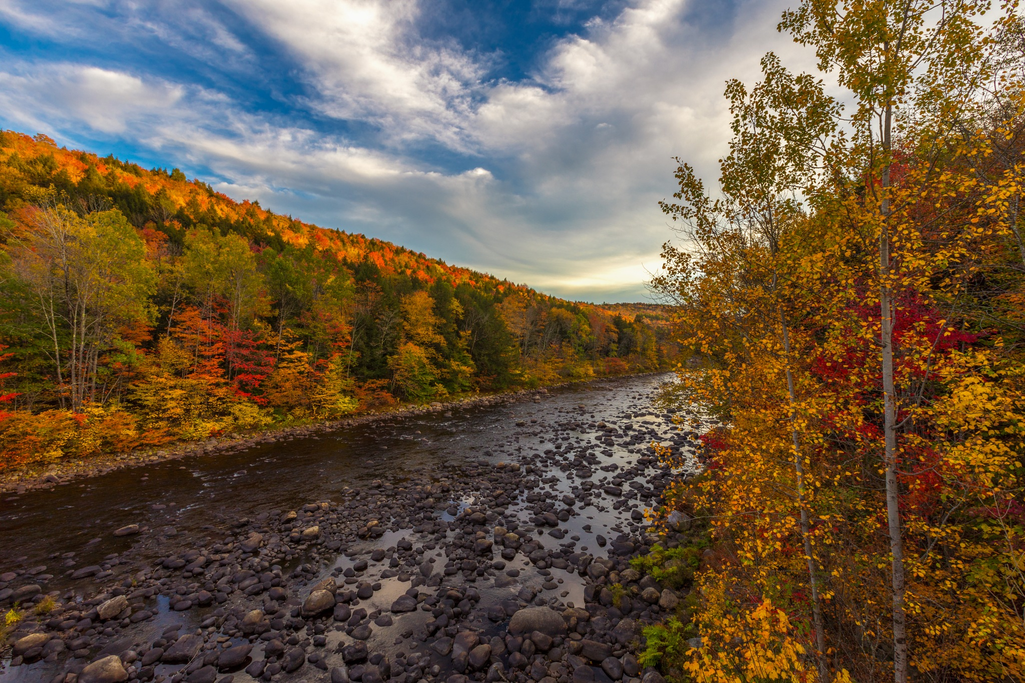The color of Fall by Dominick Chiuchiolo
