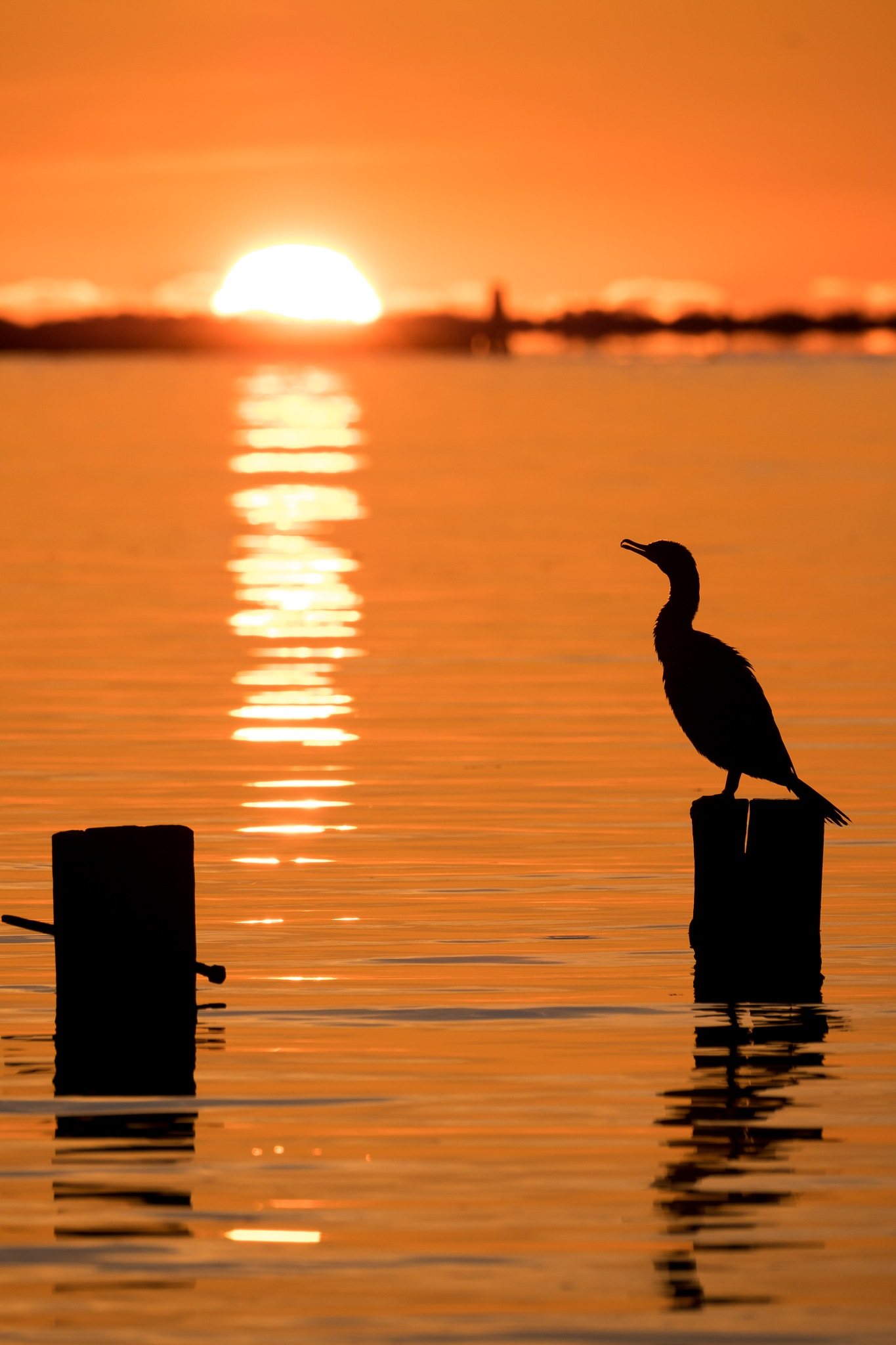 The Early Bird by Dominick Chiuchiolo