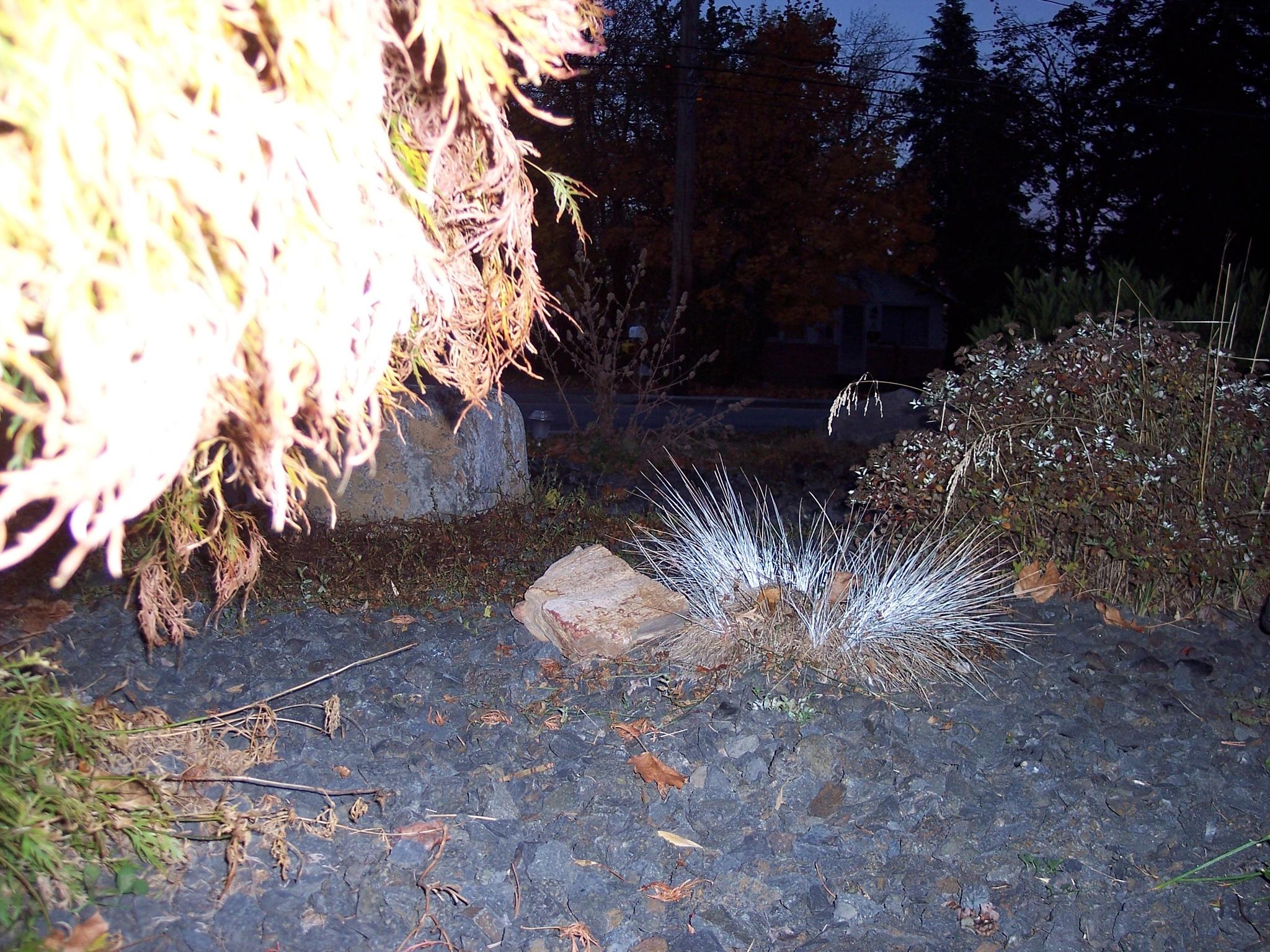 Evening In my yard by Dee