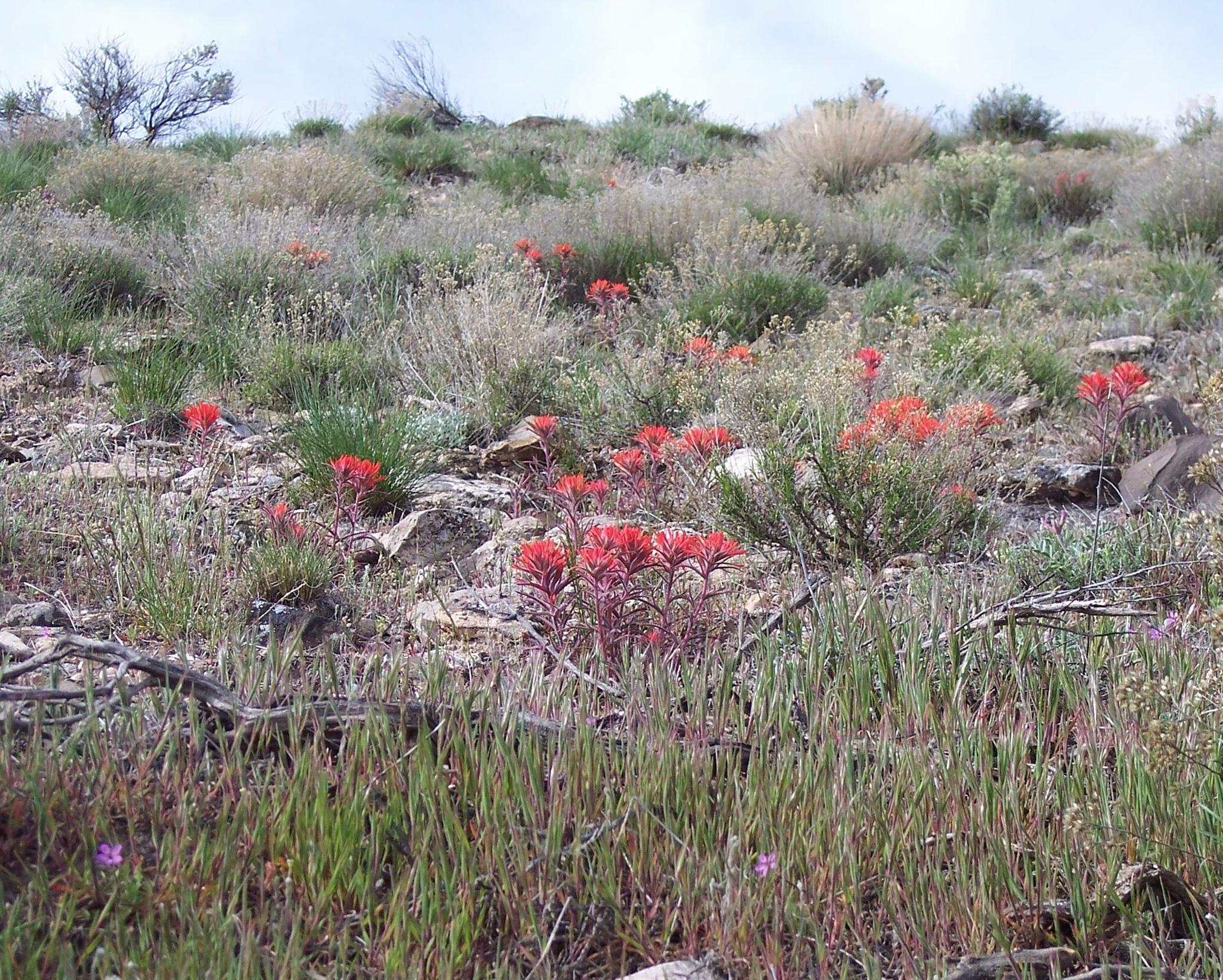 Flowers on a hillside by Dee