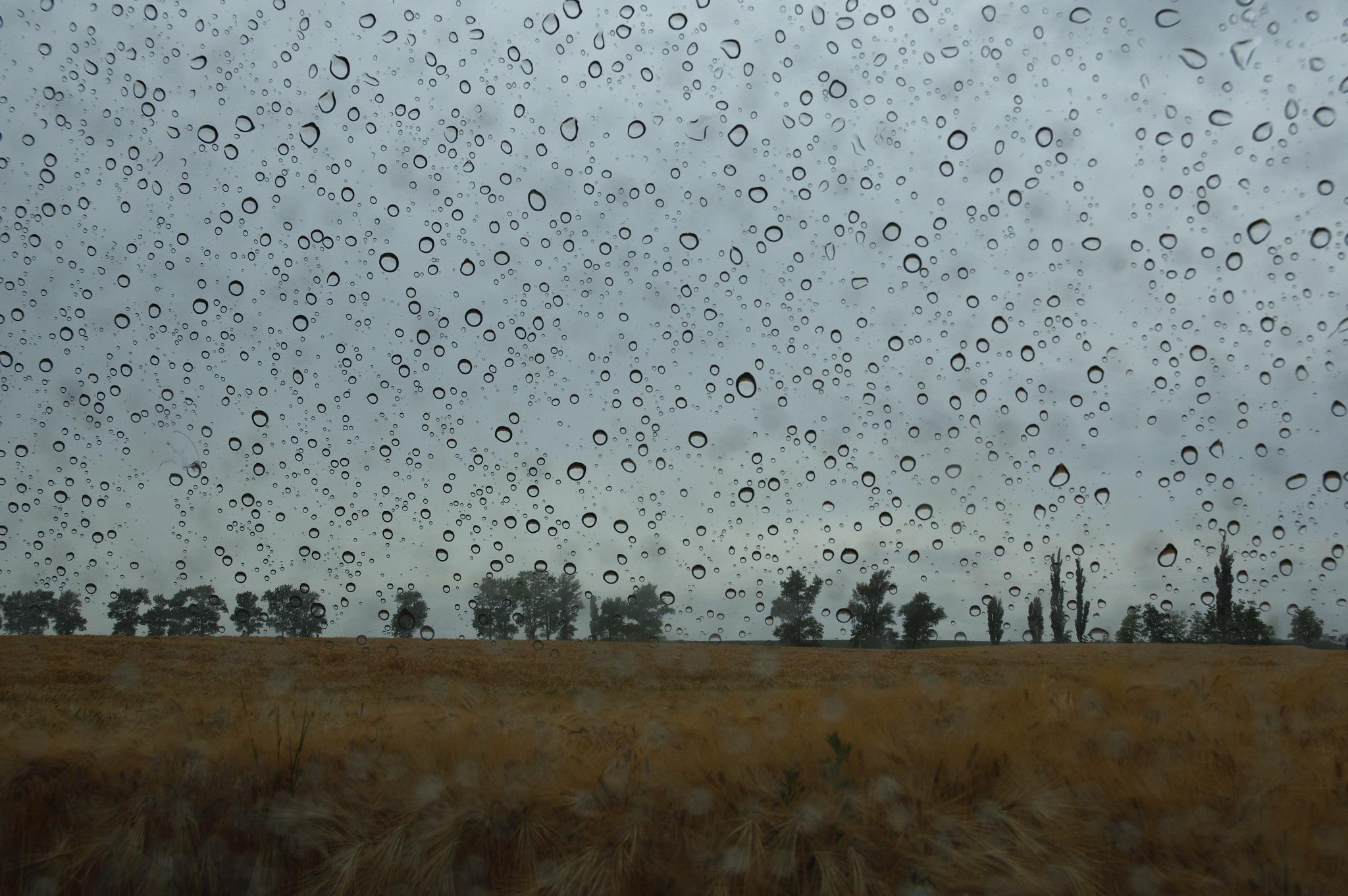 Rain by Kovacs Krisztian