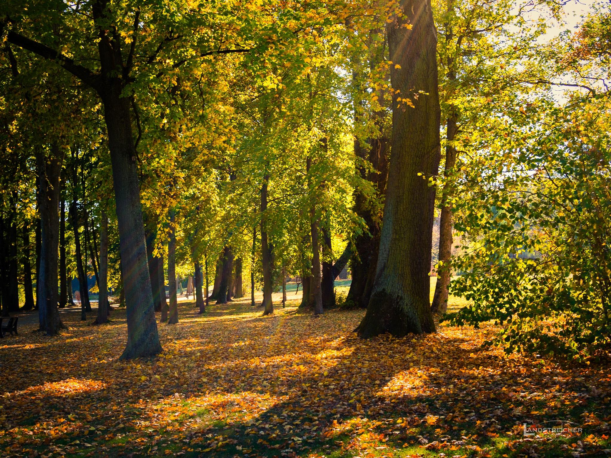Autumn Sun Rays by Landstreicher