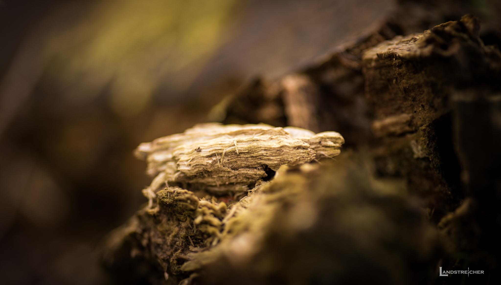 Forest Walk by Landstreicher