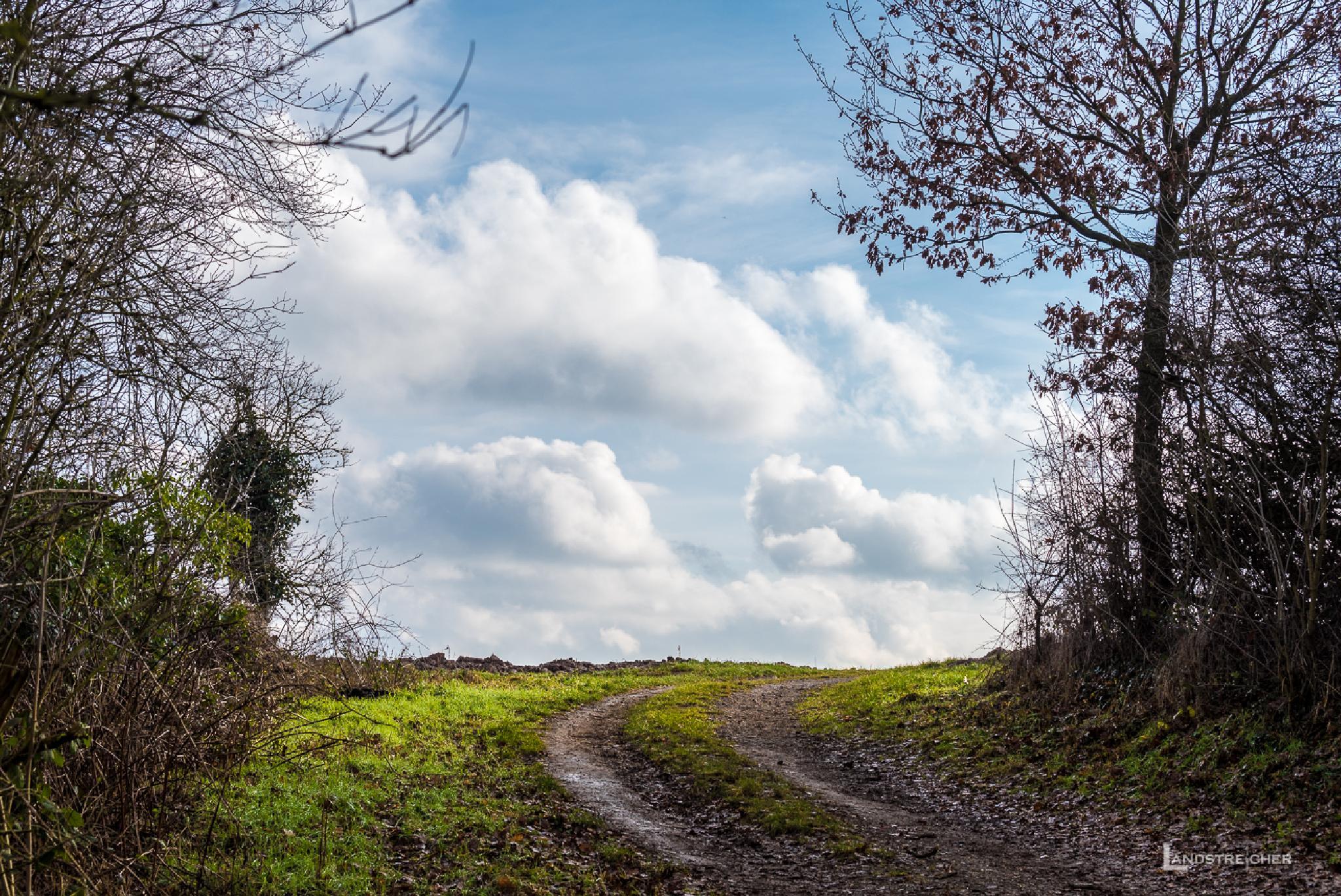 Waldweg by Landstreicher