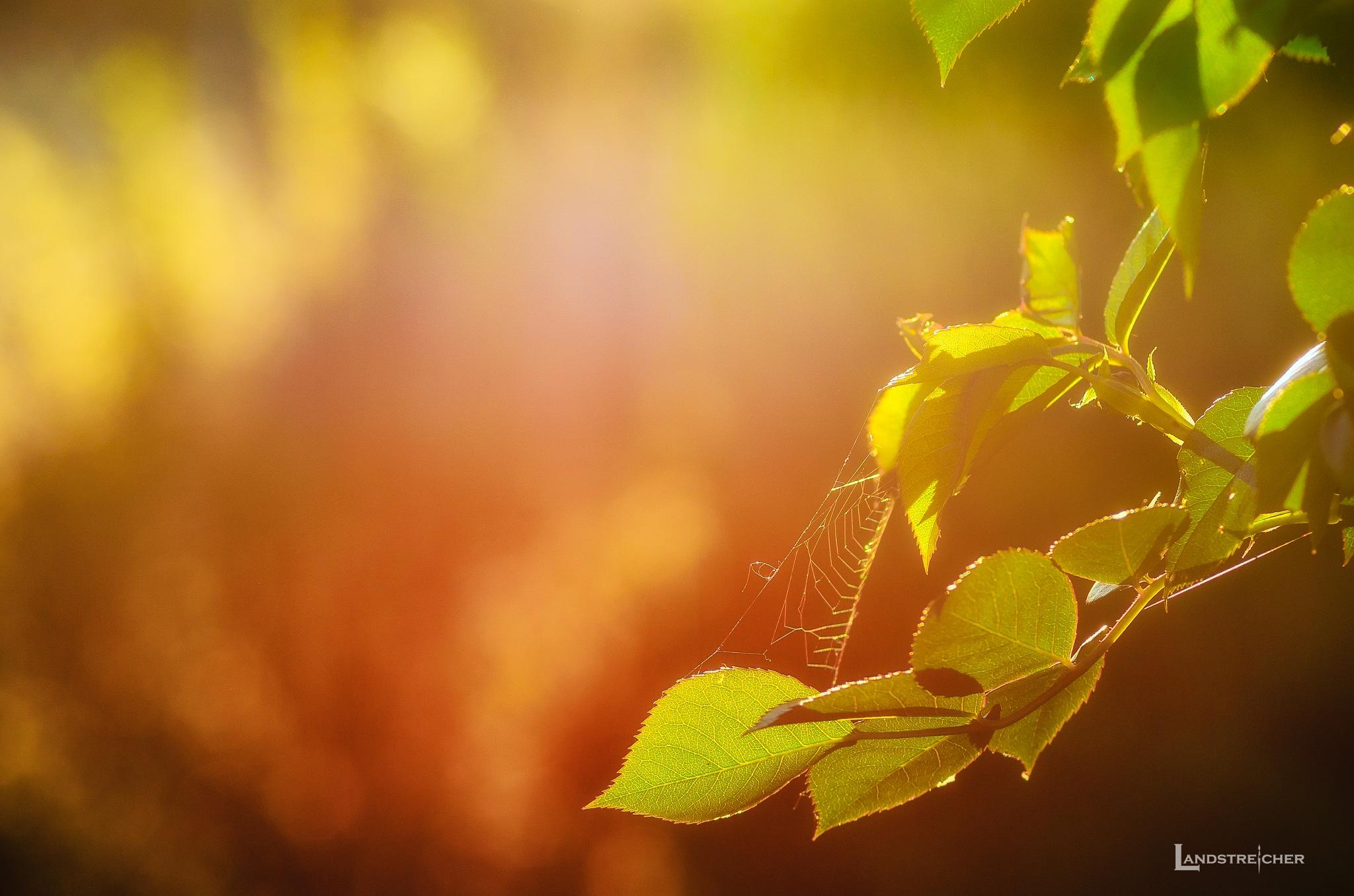 Spider Spring by Landstreicher