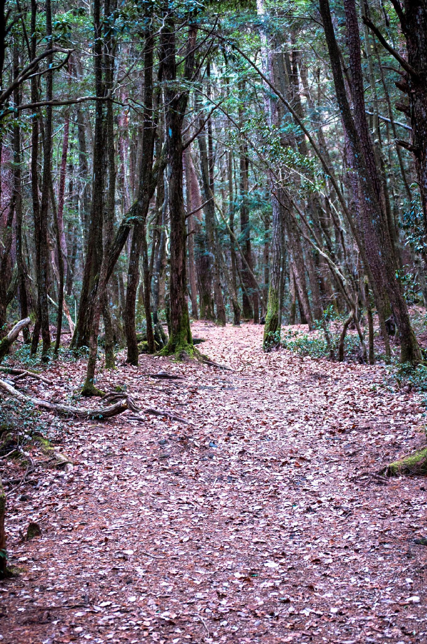 Find Your Path by austinjelcick