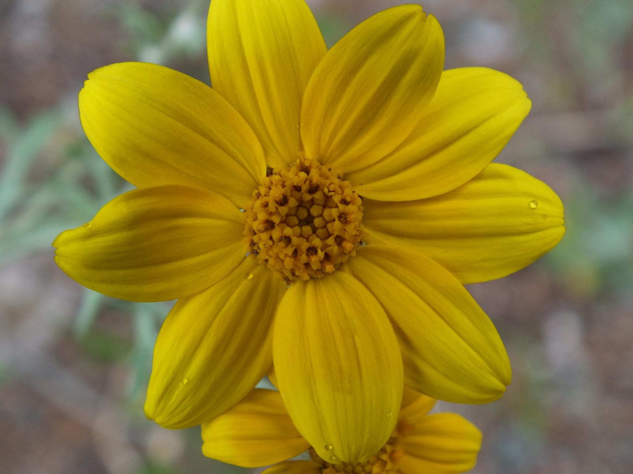 Macro in Yellow by DJ Pace
