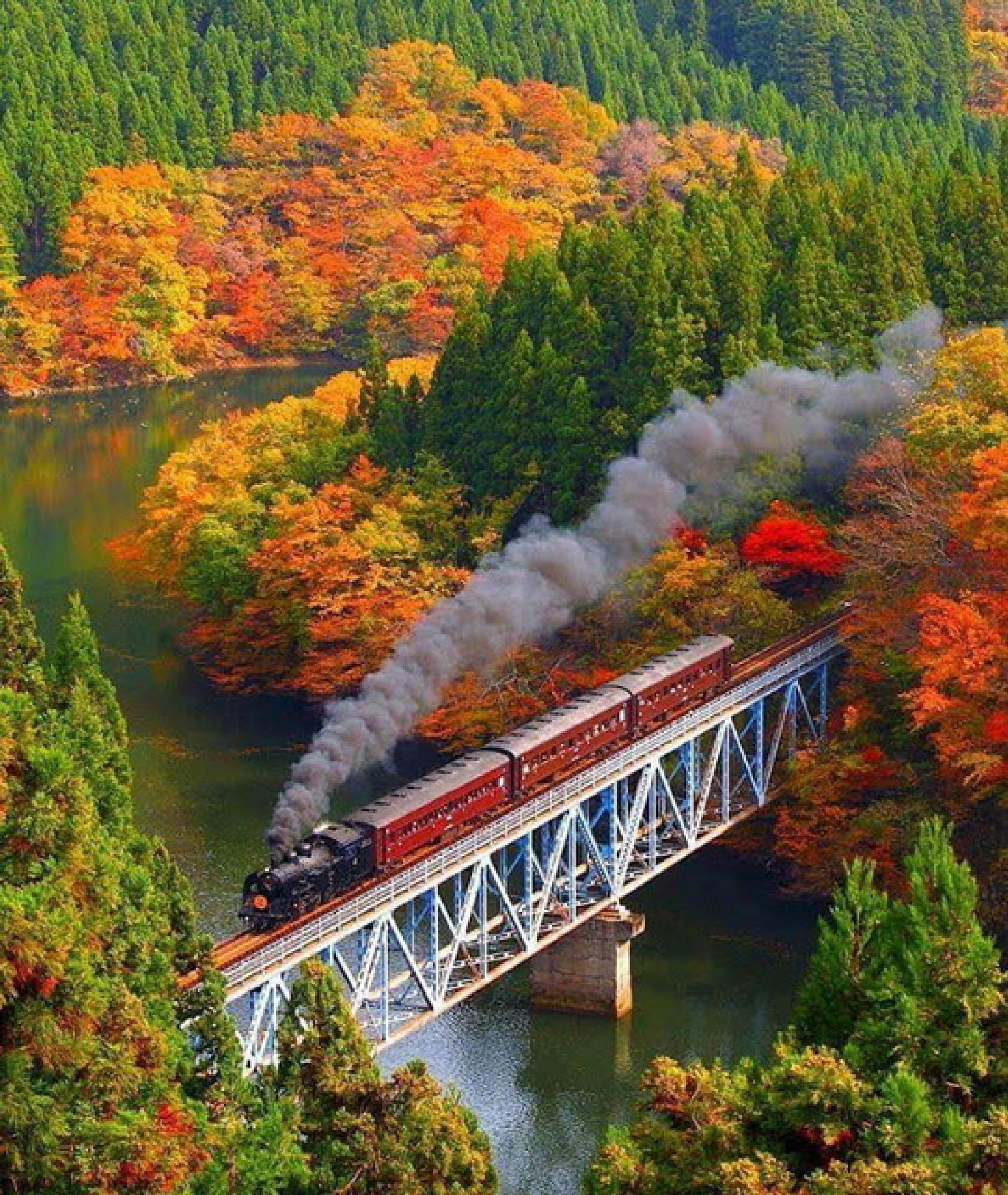 Autumn Train by RobW '92