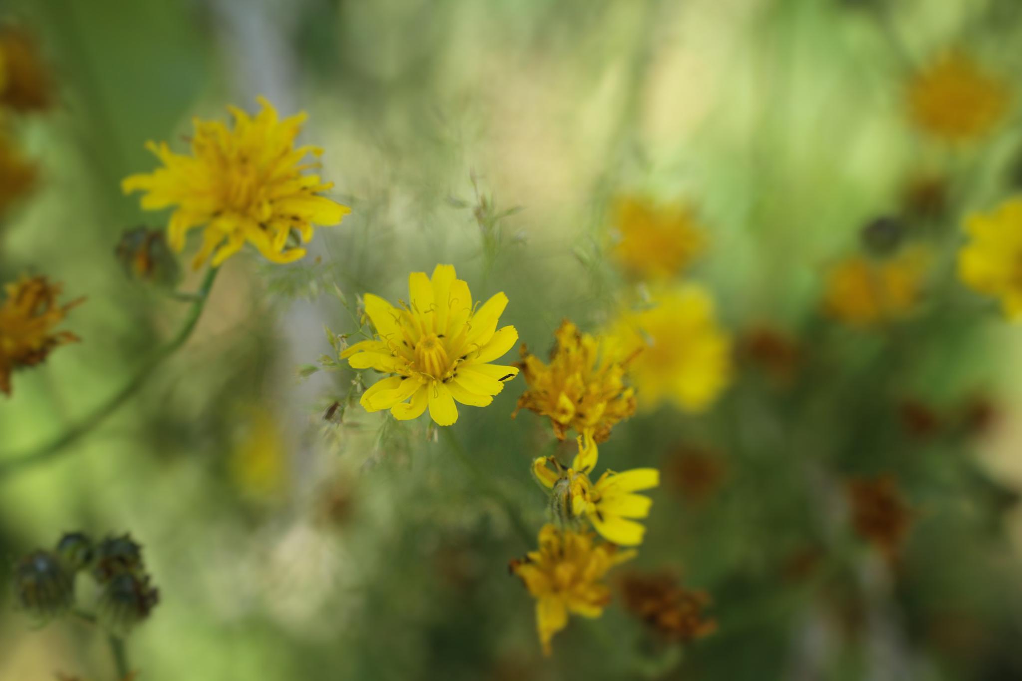 bloem by ElseH