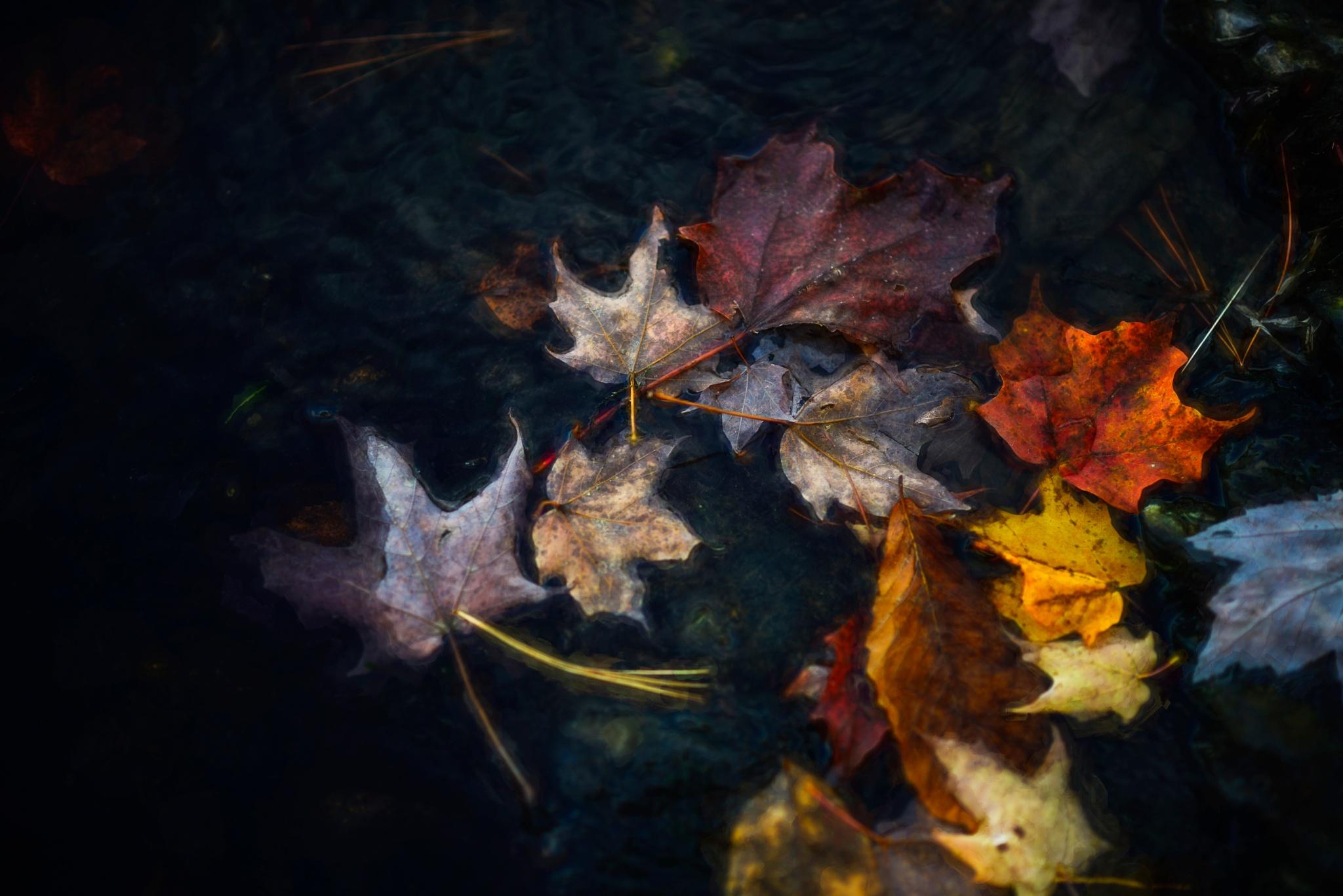 Journée d'automne by sylviecorriveau