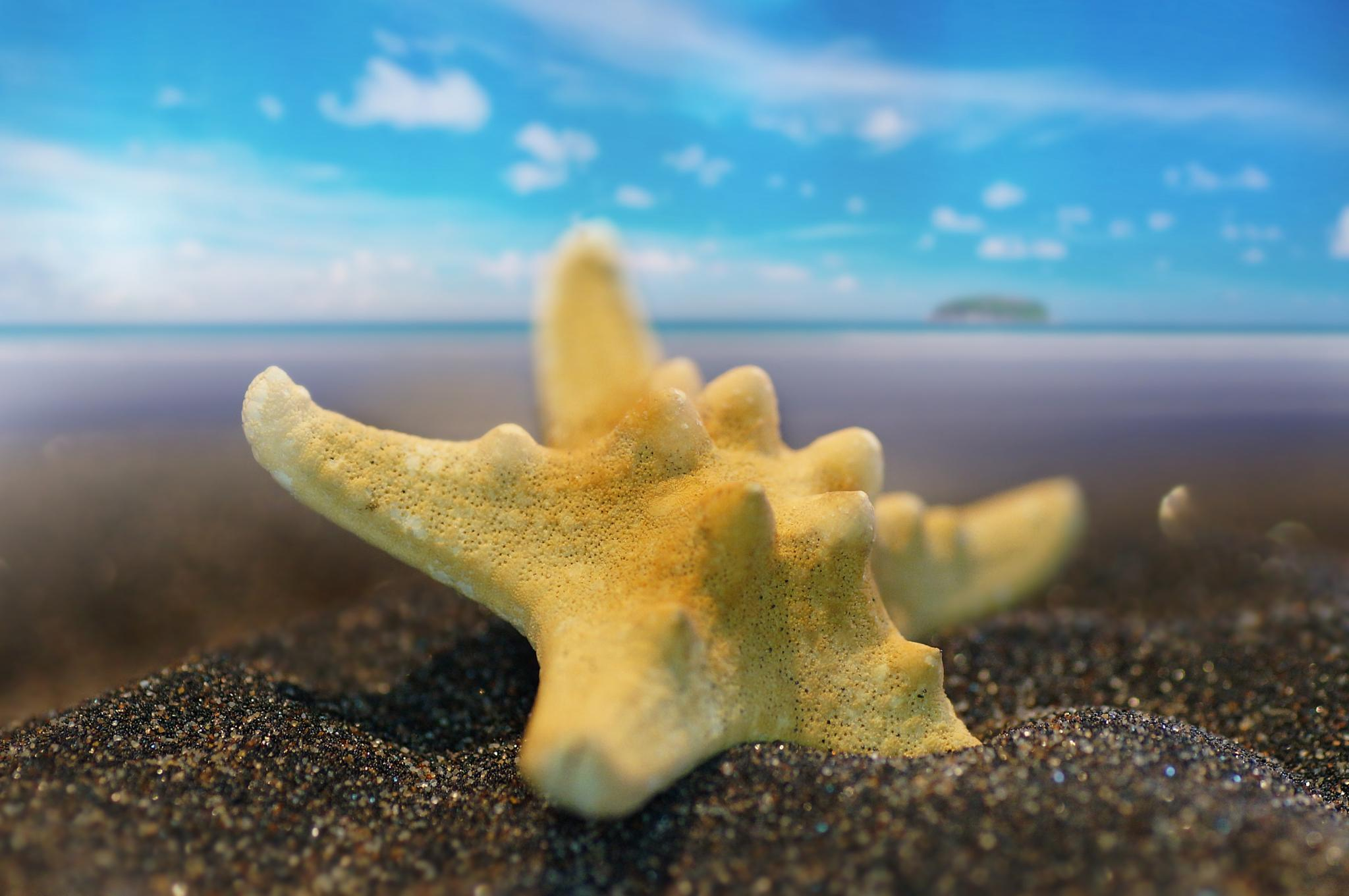 Starfish on the beach by sylviecorriveau