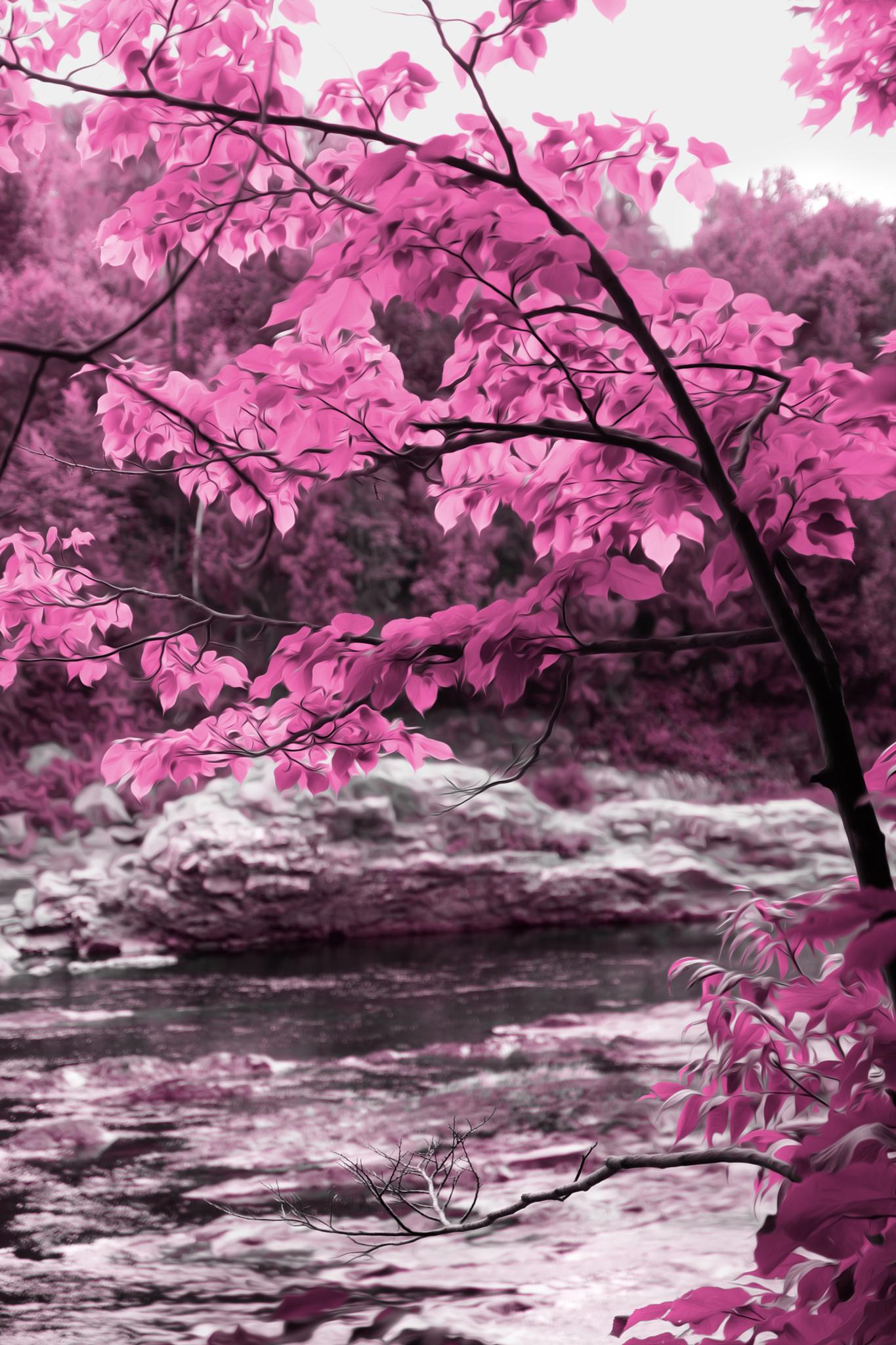 Pink forest by sylviecorriveau