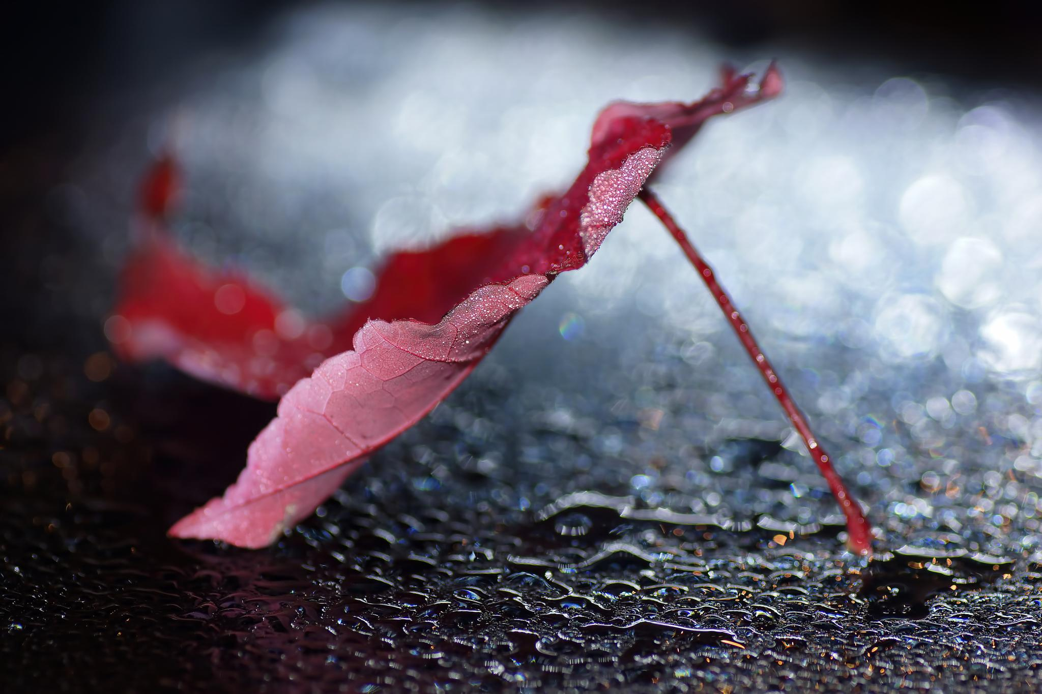 Artistic autumn leaf by sylviecorriveau