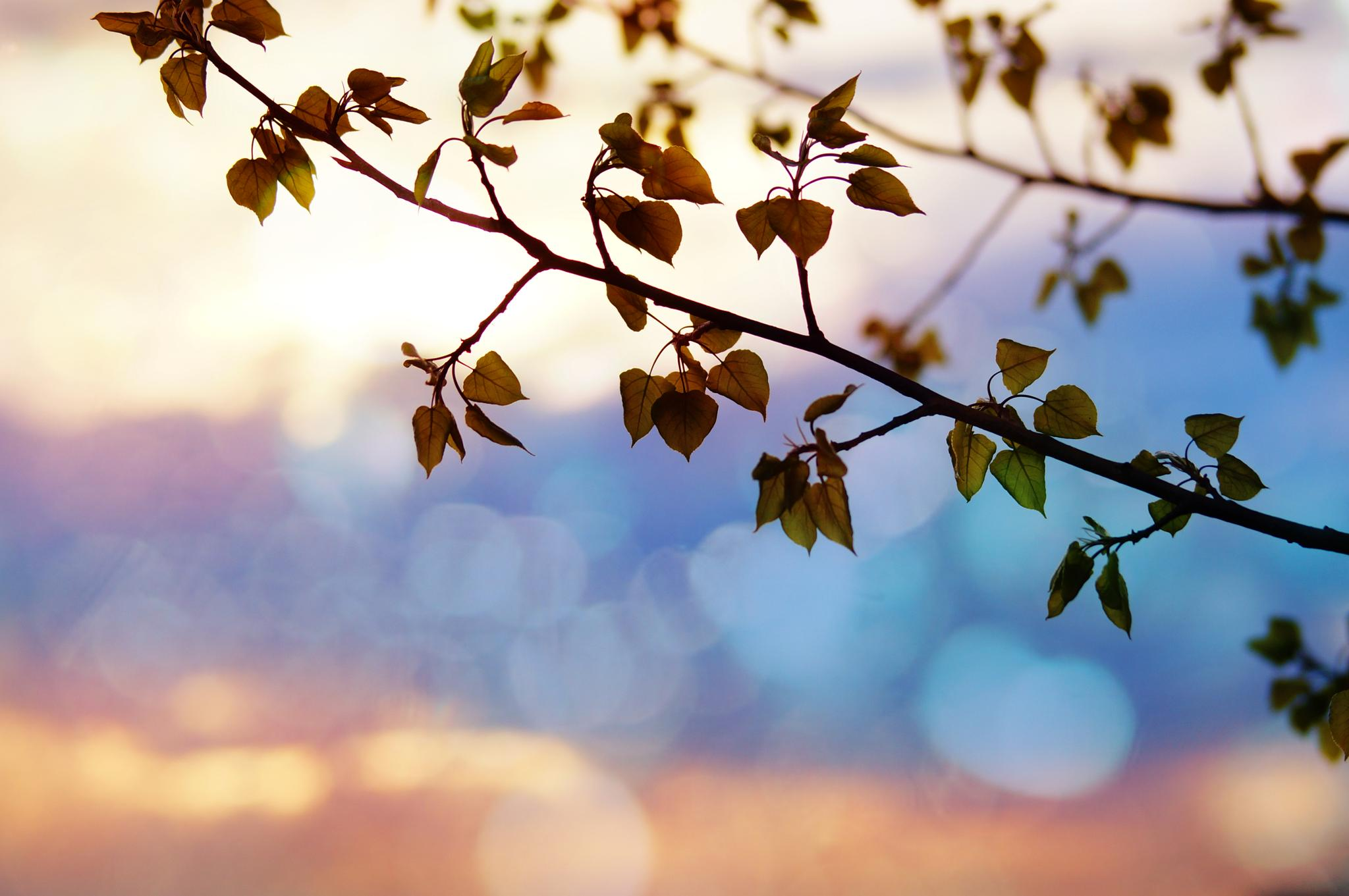 Dramatic sunset, soft color by sylviecorriveau