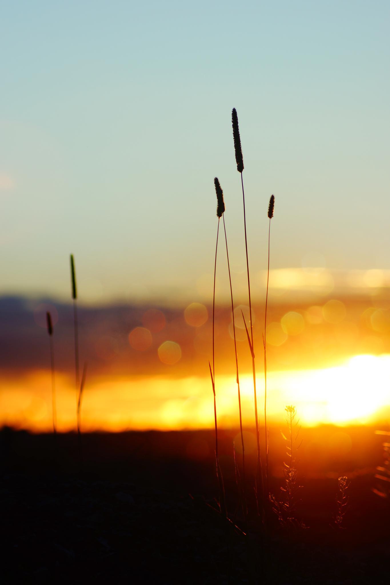Sunset, bokeh light by sylviecorriveau