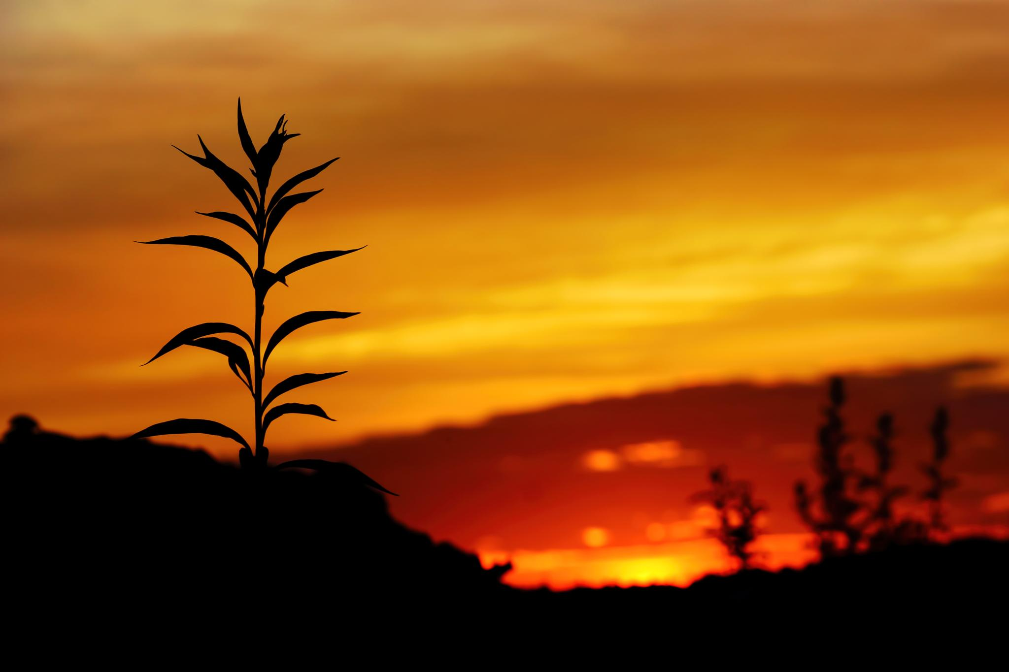 Minimalist golden sunset by sylviecorriveau
