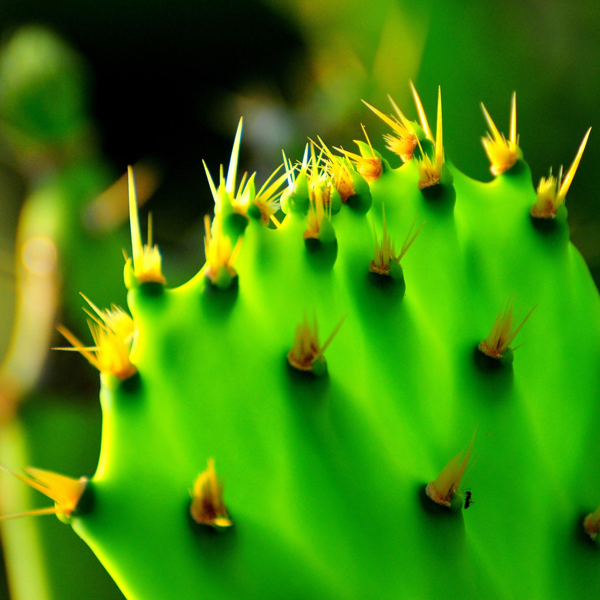 Photo in Nature #nature #flowers #random