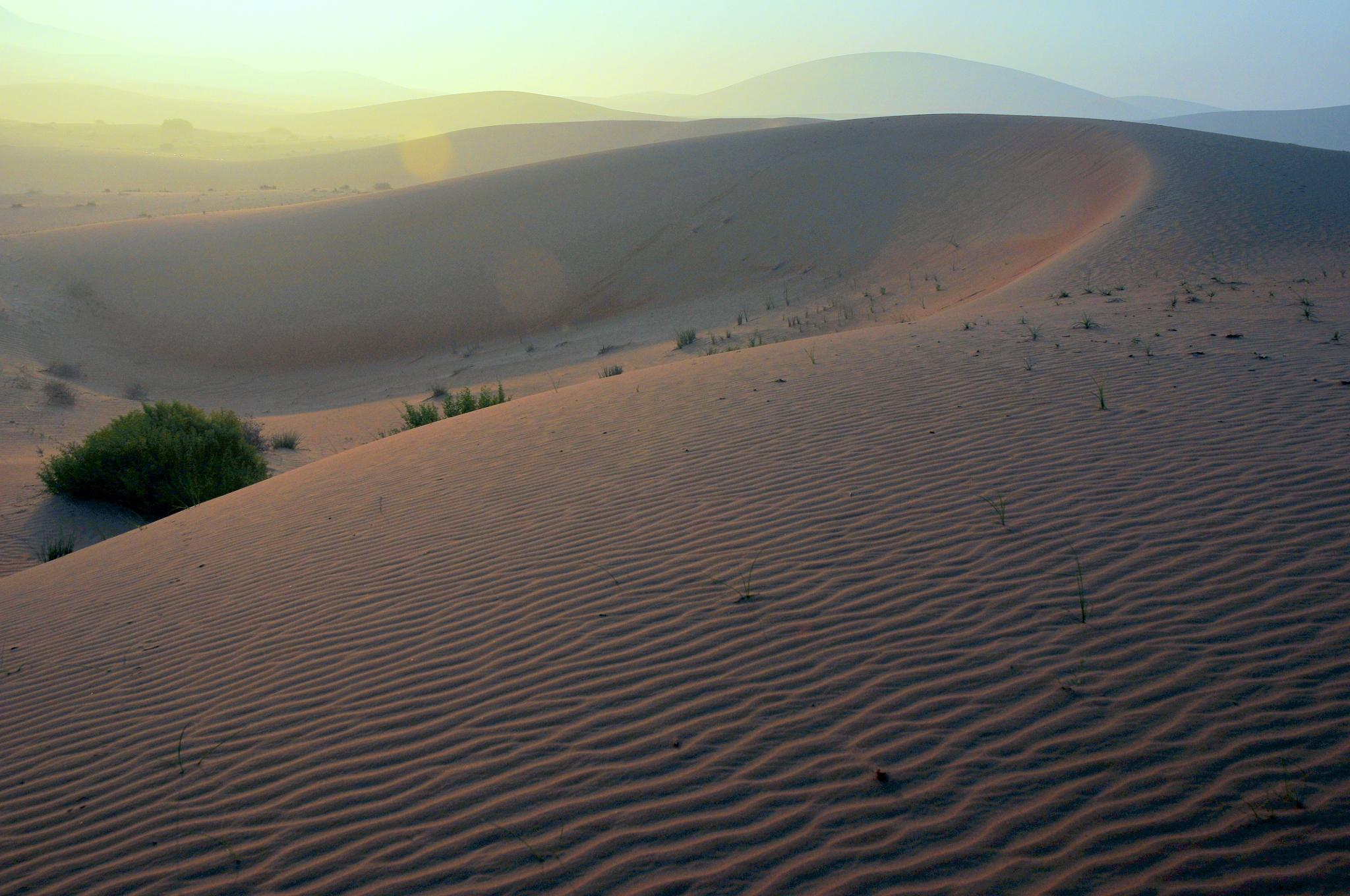 an impression of the desert by jimeier f.
