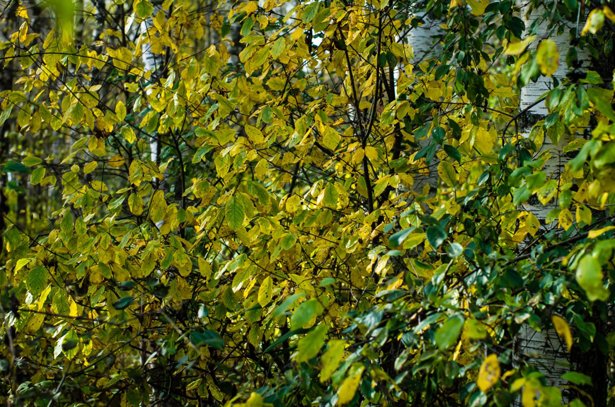 autumn colors by Janno Vään