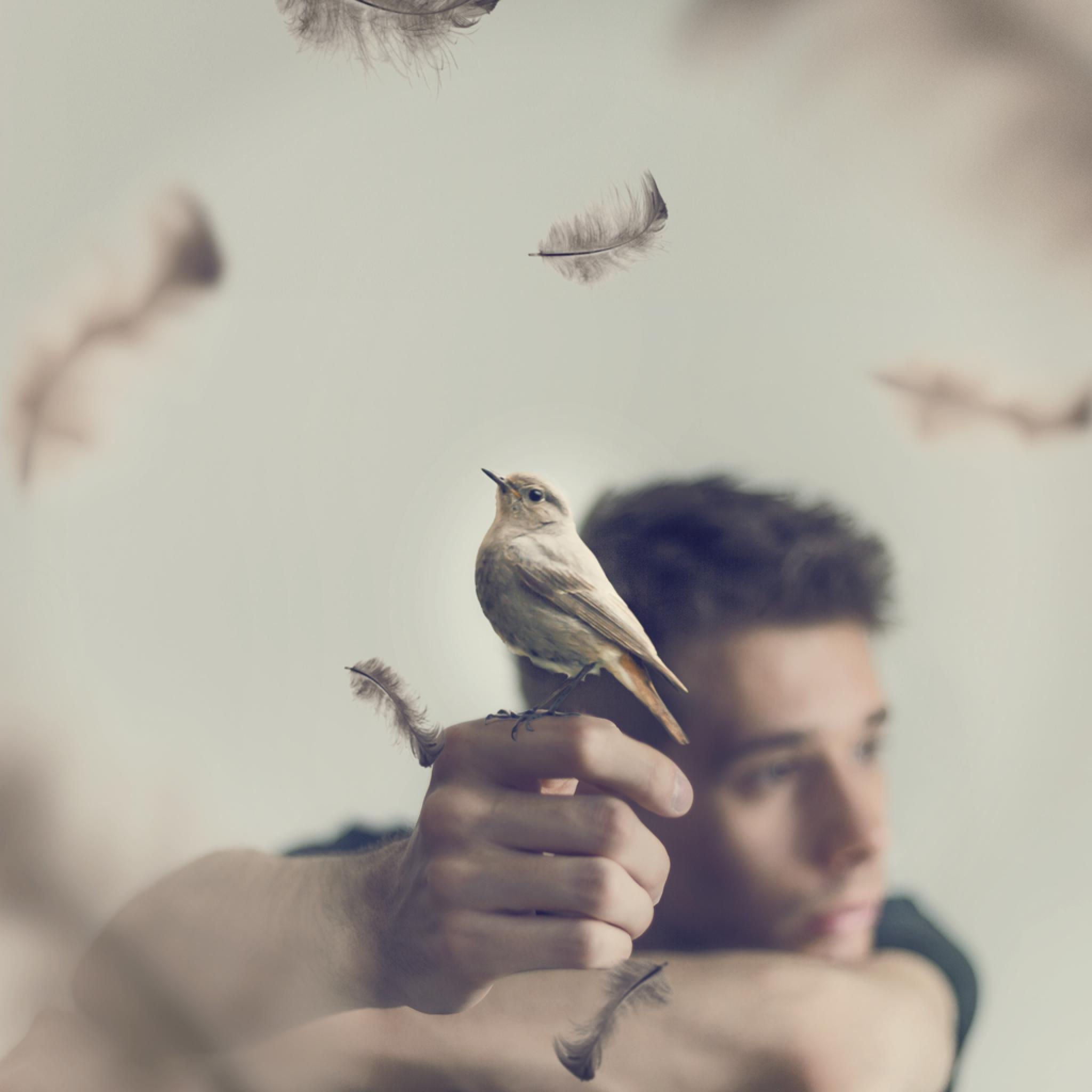 Perhaps I'll Be A Bird One Day by Mario Salvenmoser