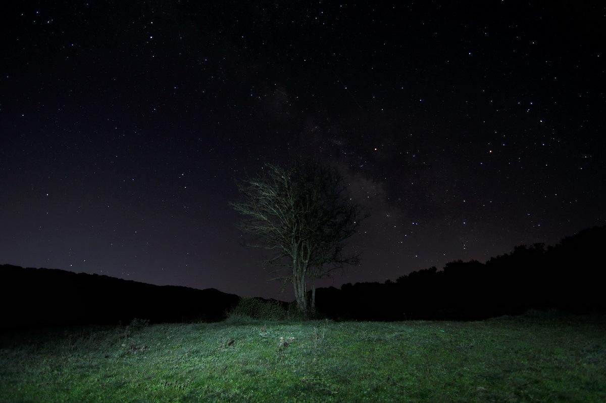 el espino iluminado  by antoniopalmeraspalmeras