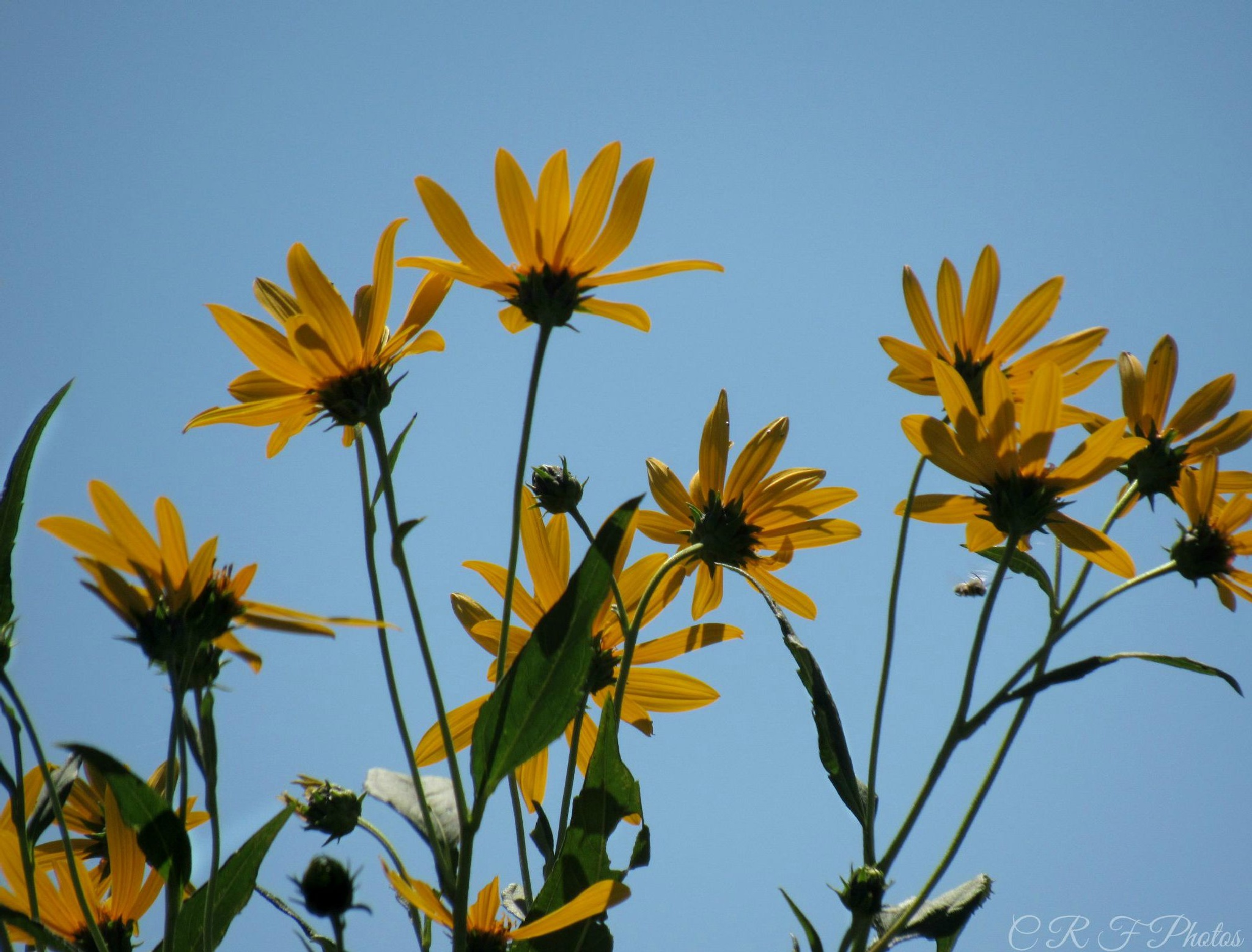 Wildflowers Against Blue Sky by fergusoncindy33