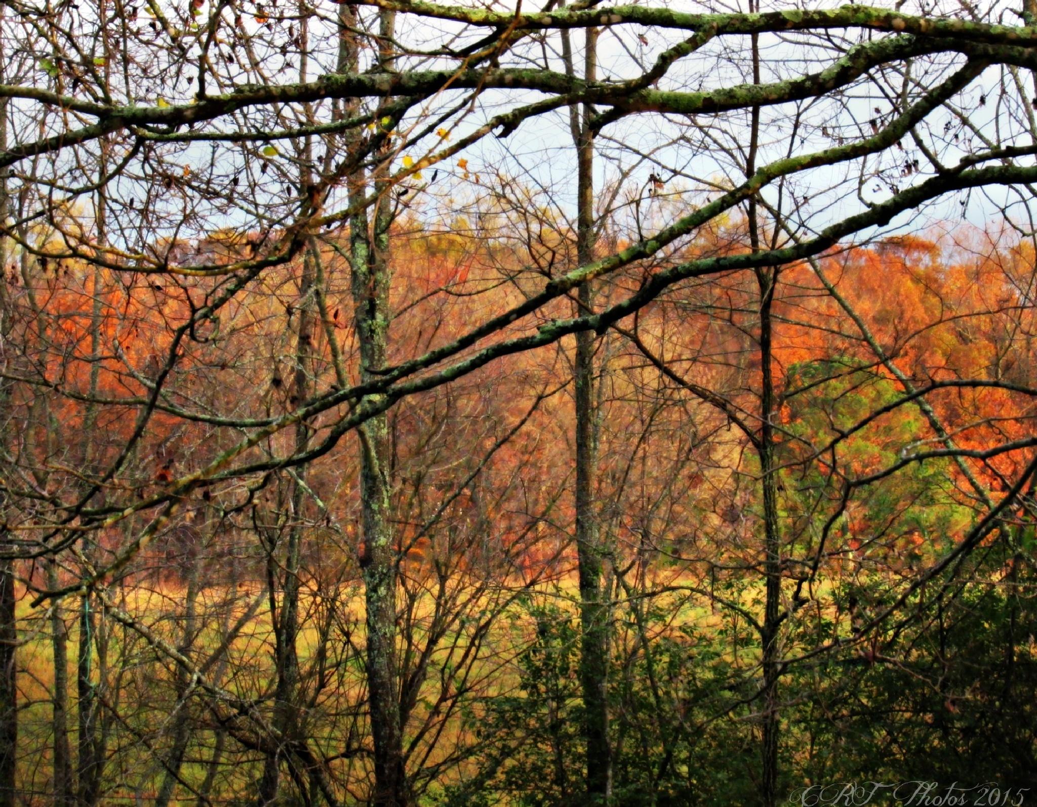 Beautiful Autumn Light by fergusoncindy33