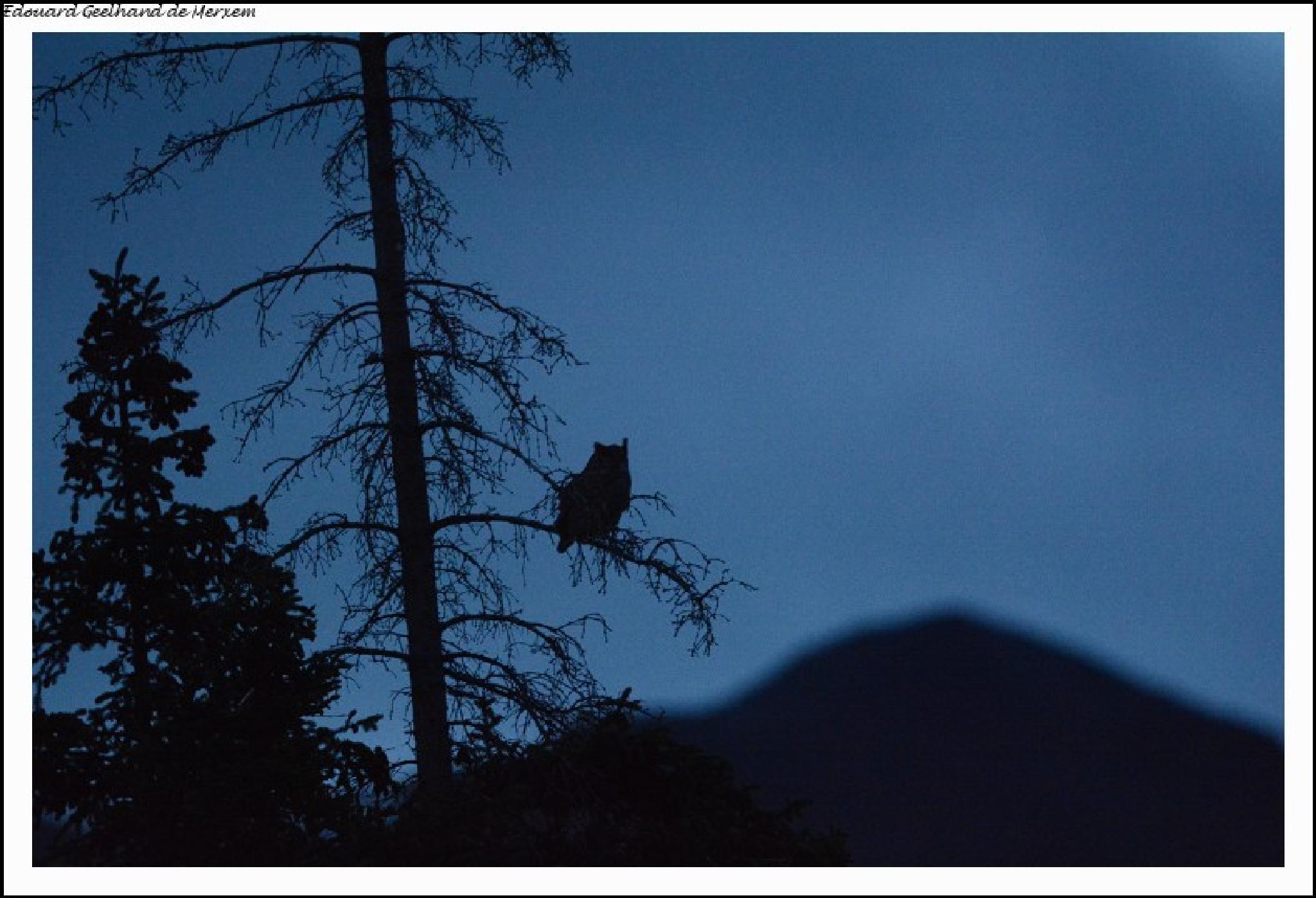 Like an owl in the night by Edouard Geelhand de Merxem