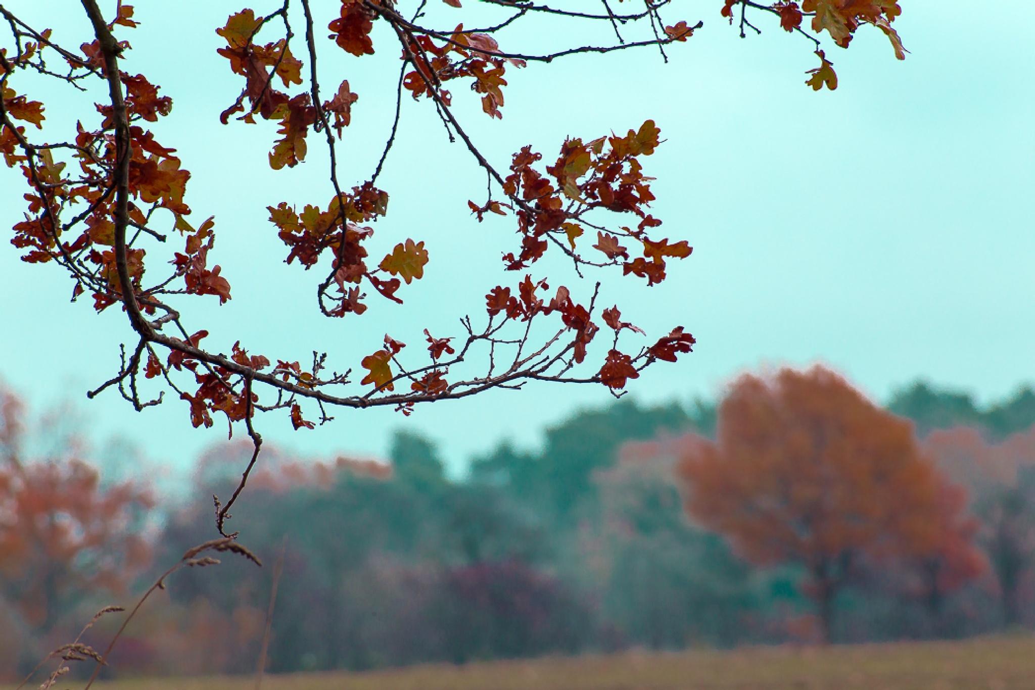 Blätter by gkkosmetik