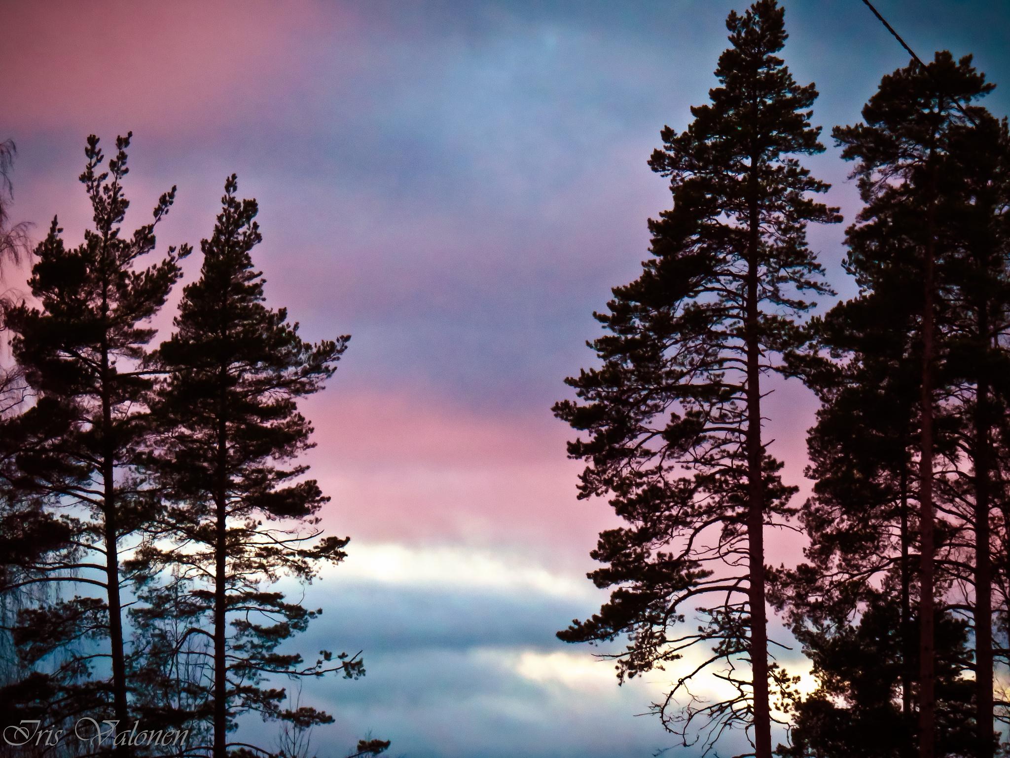 Evening lights by Iris V