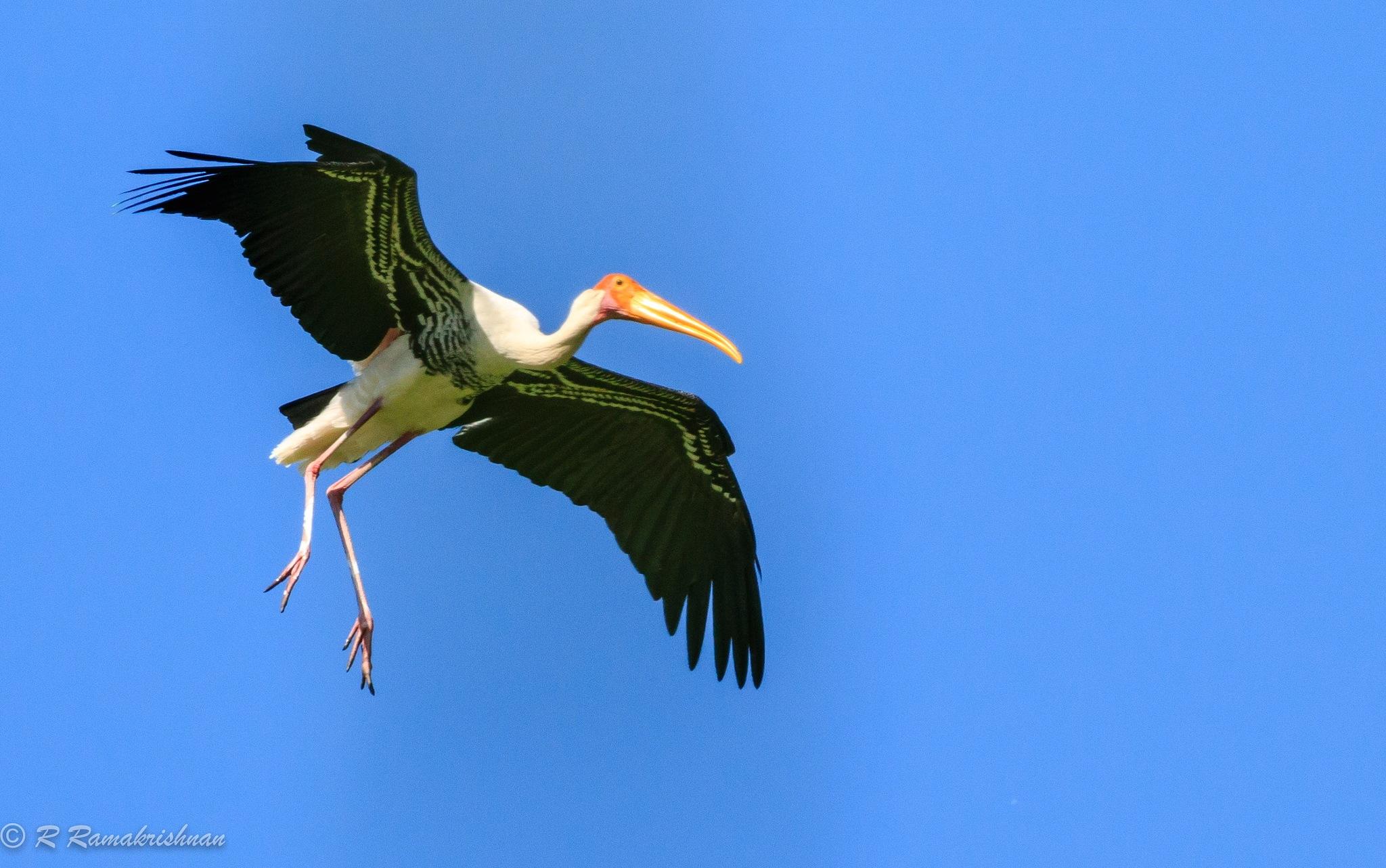 Soft landing! by R Ramakrishnan
