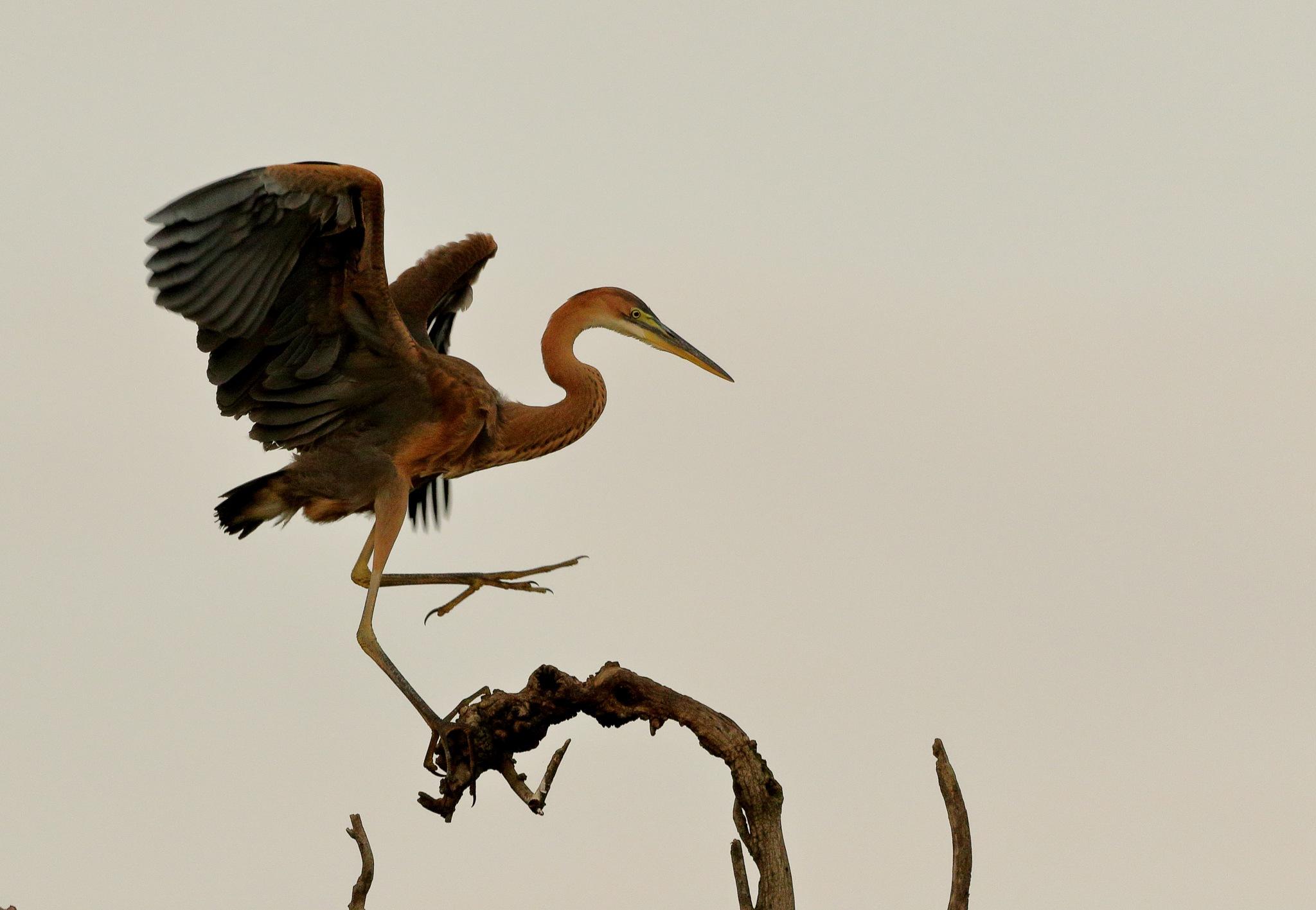 Untitled by R Ramakrishnan