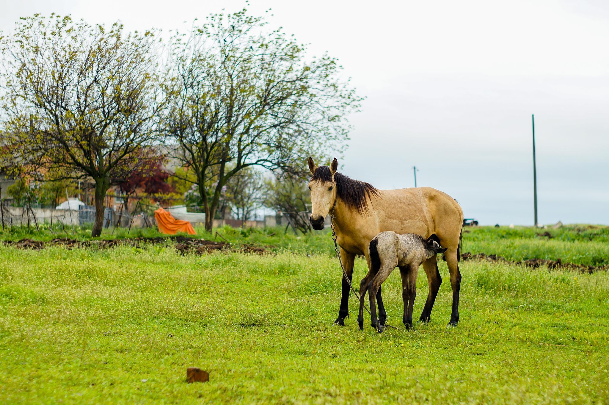 Horse by Shalva Mamukashvili