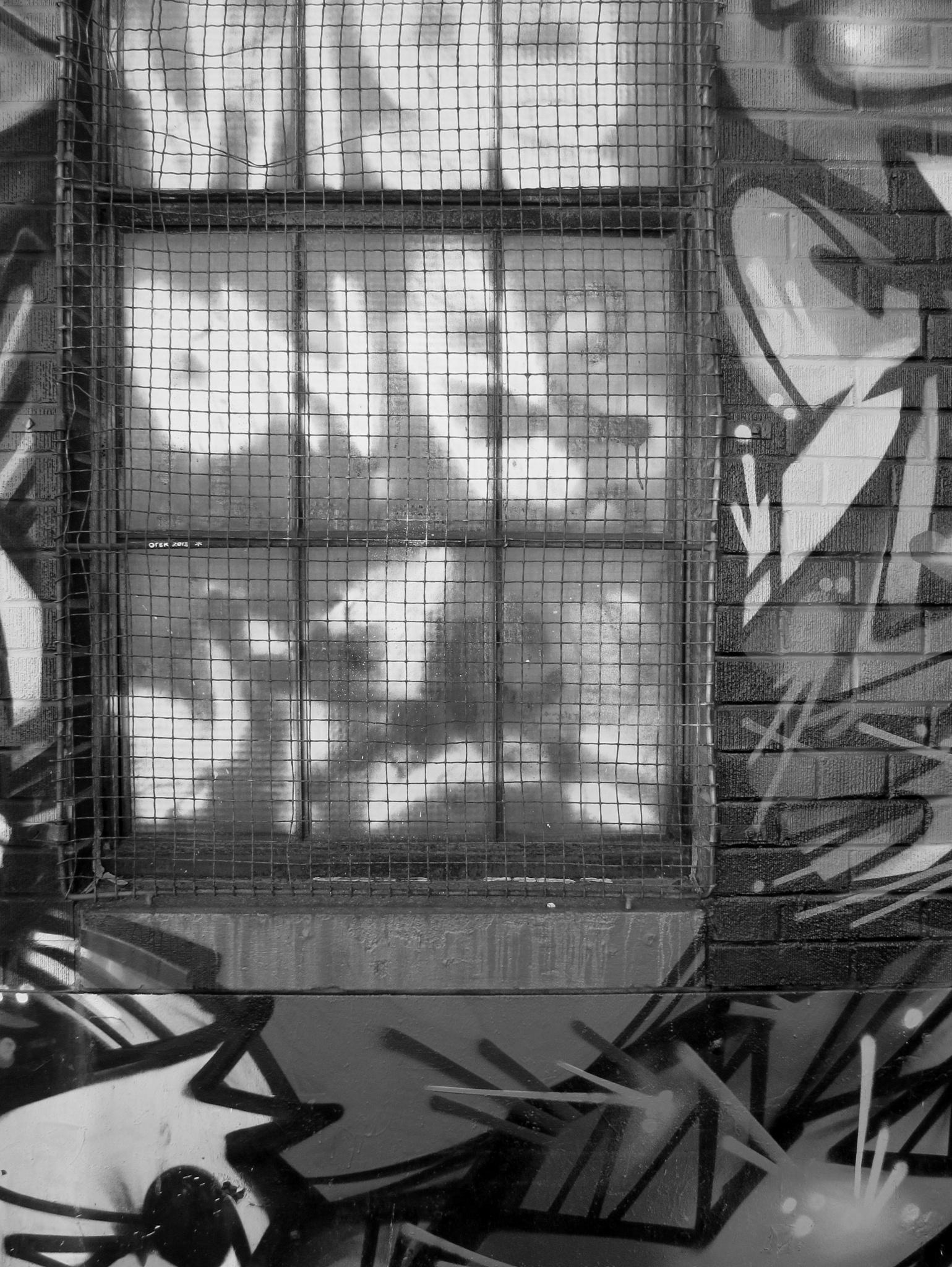 windows by robert butts