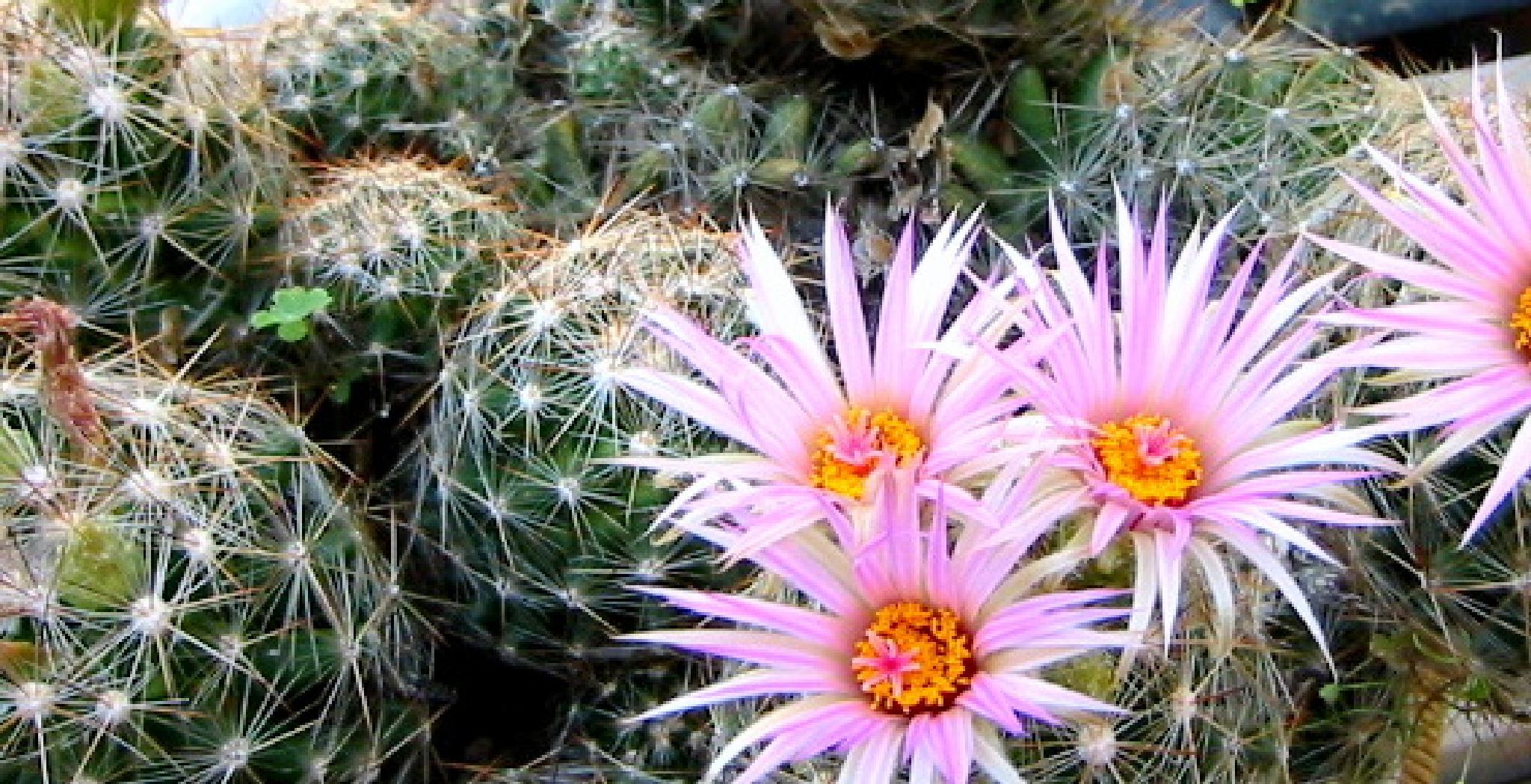flowers by Betty Nelms