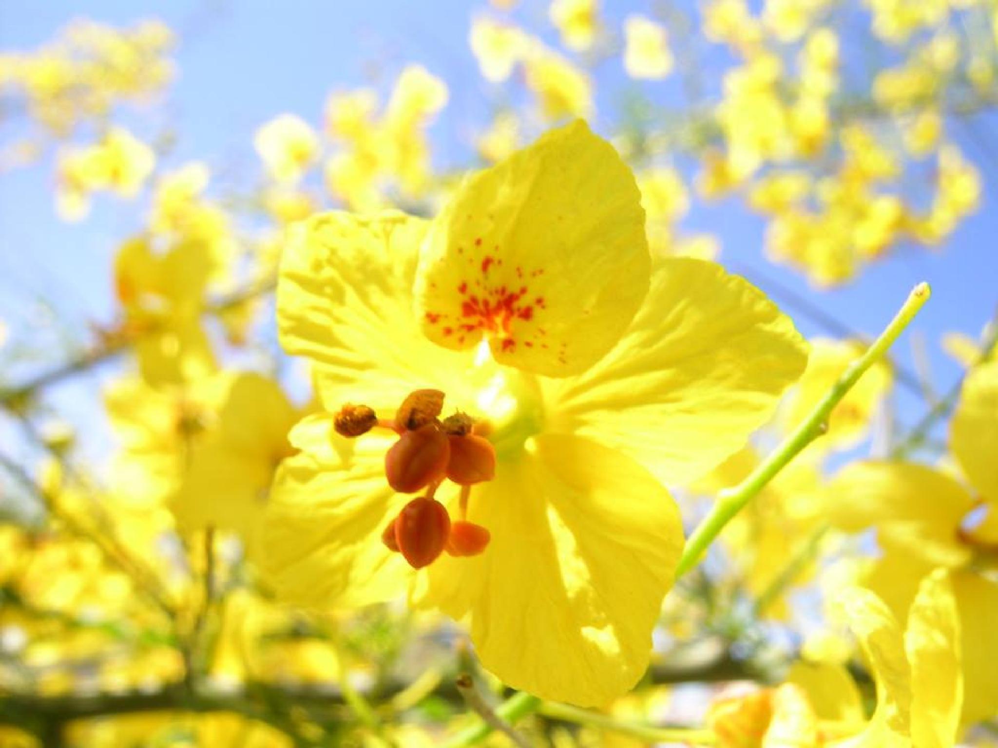 Flower by Log Rachel