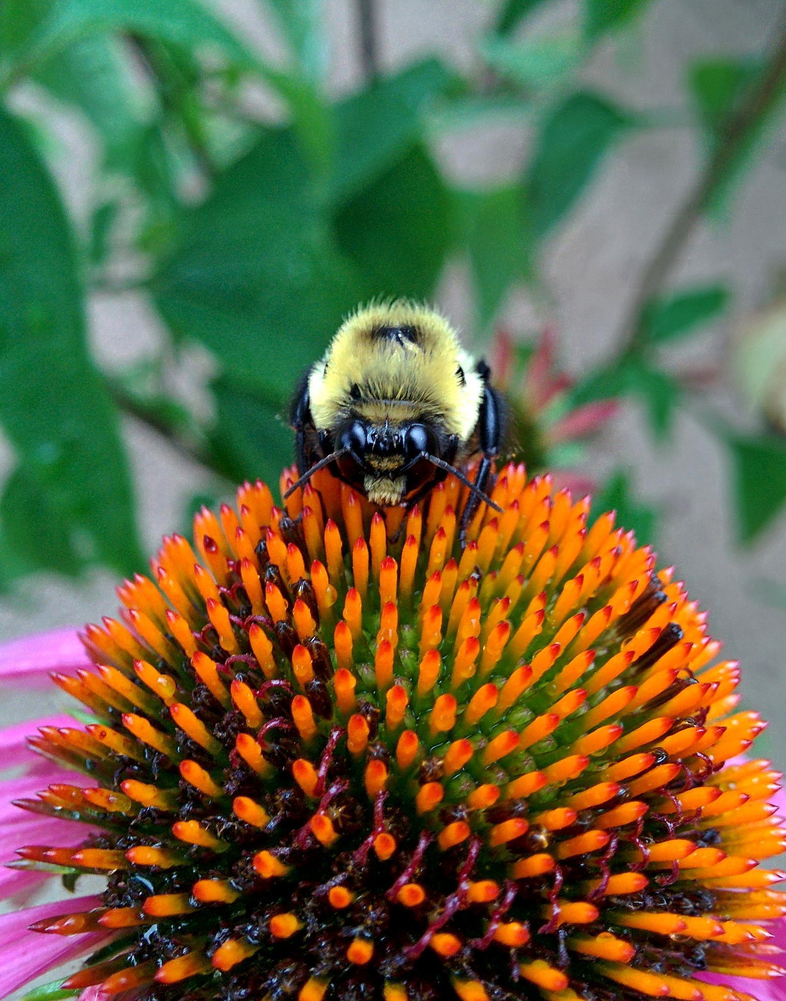 Ms Bumblebees beautiful eyes.. by semeon22