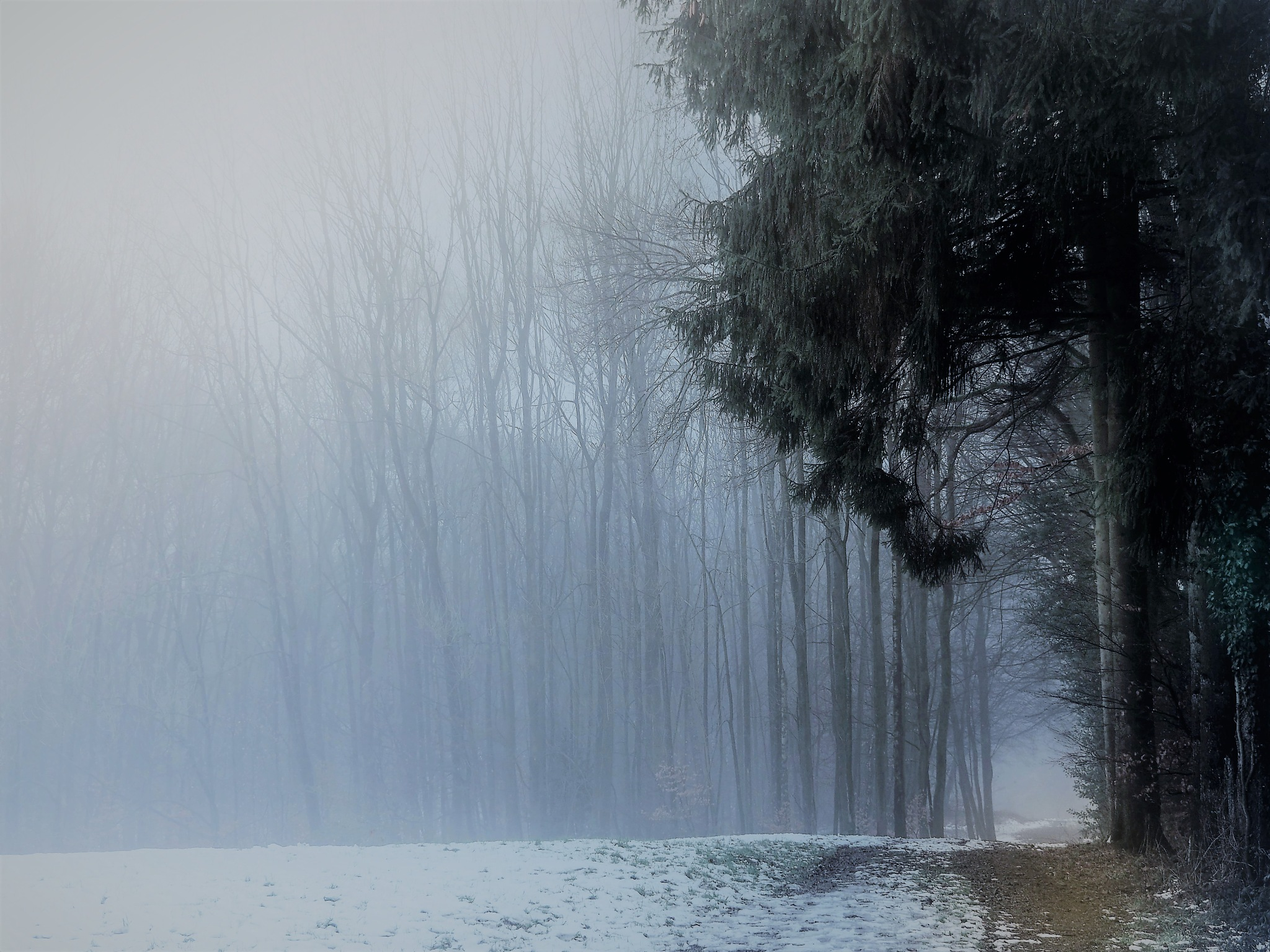 Photo in Nature #nature #landscape #fog #forest